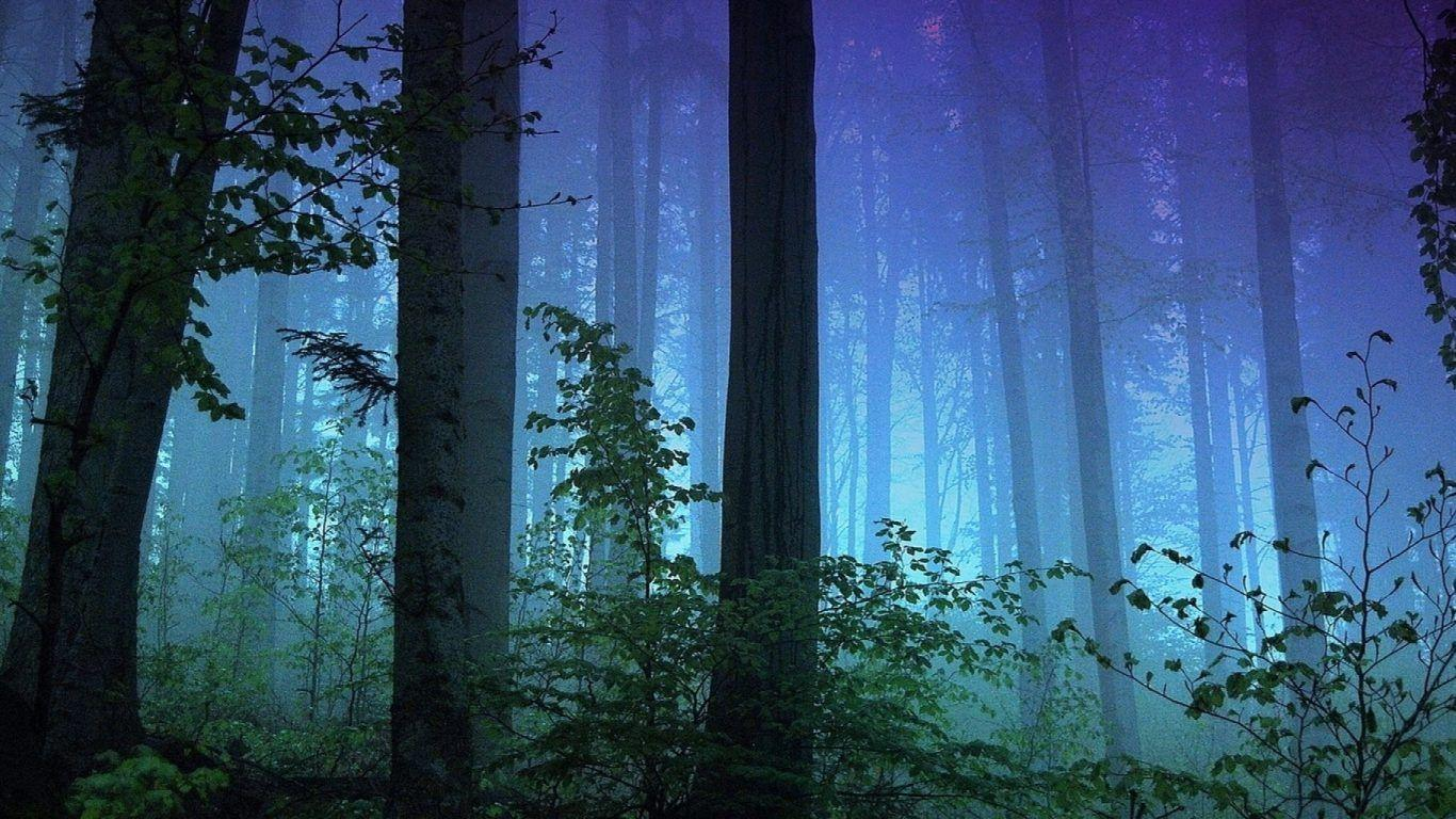 Trees: Park Redwood National Sequoia Nature Screensavers For