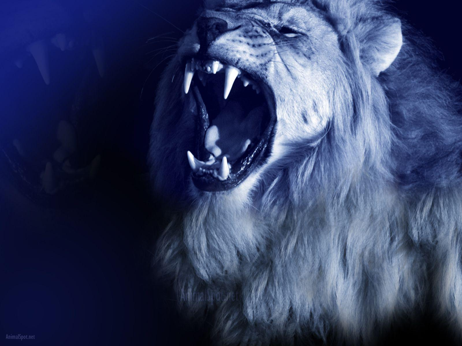 Lion Roar Wallpapers - Wallpaper Cave - photo#3