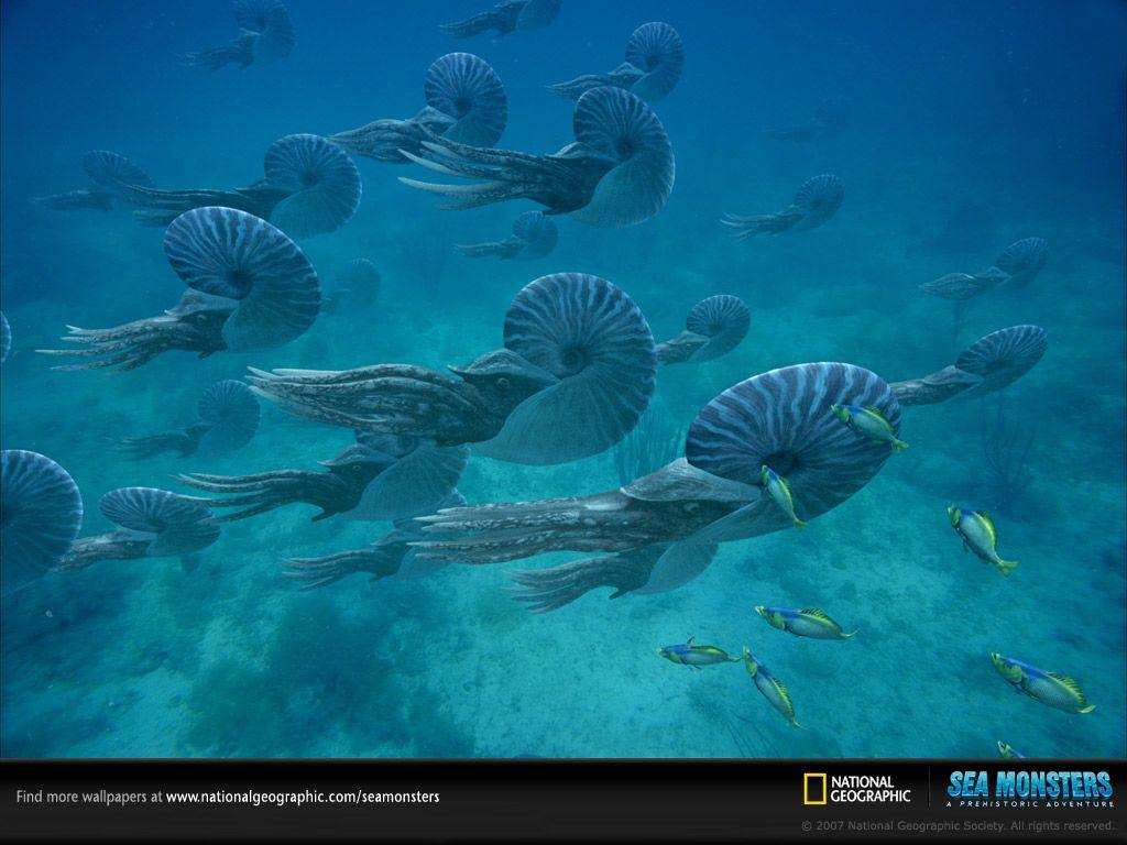 Ammonites - Wallpapers - Sea Monsters: A Prehistoric Adventure ...