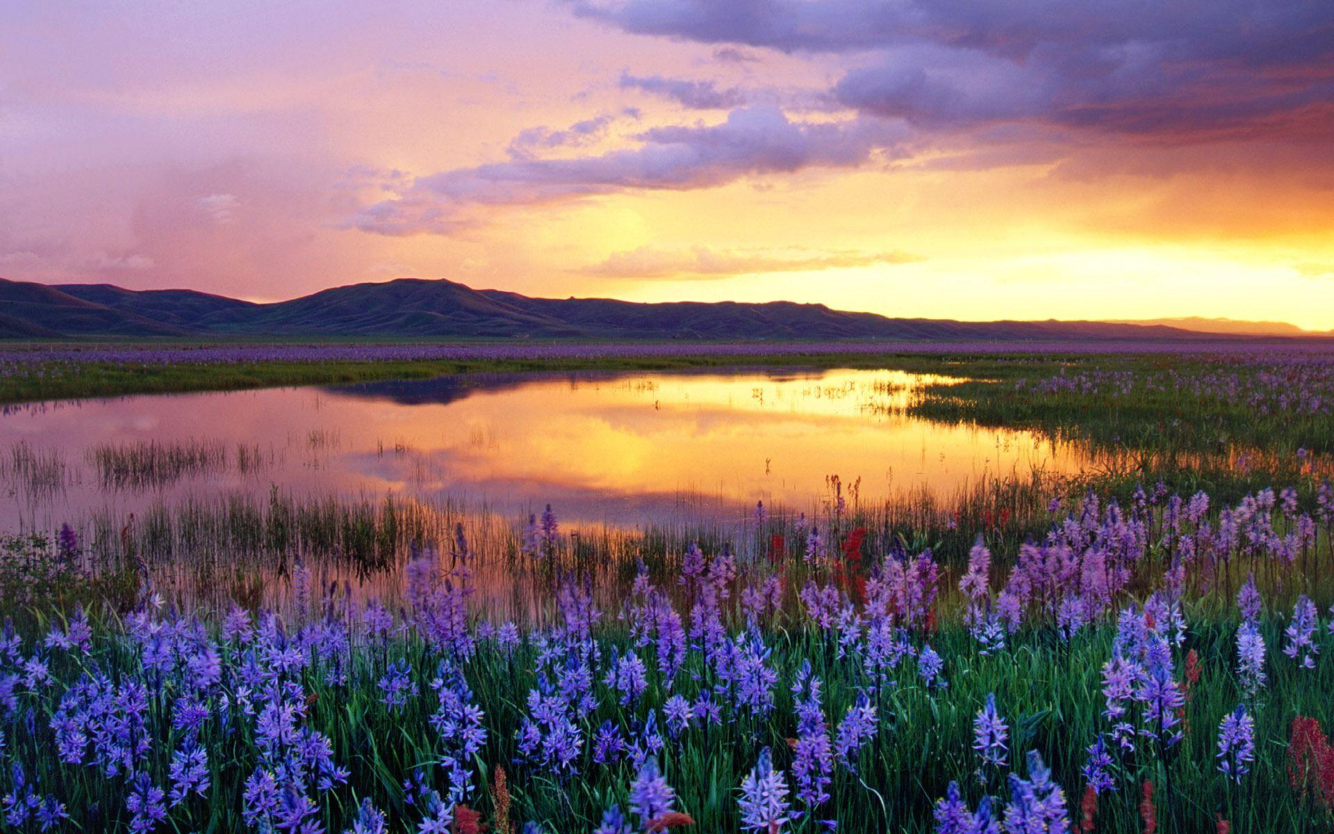 Camas Prairie Wallpaper Landscape Nature Wallpapers in jpg format ...