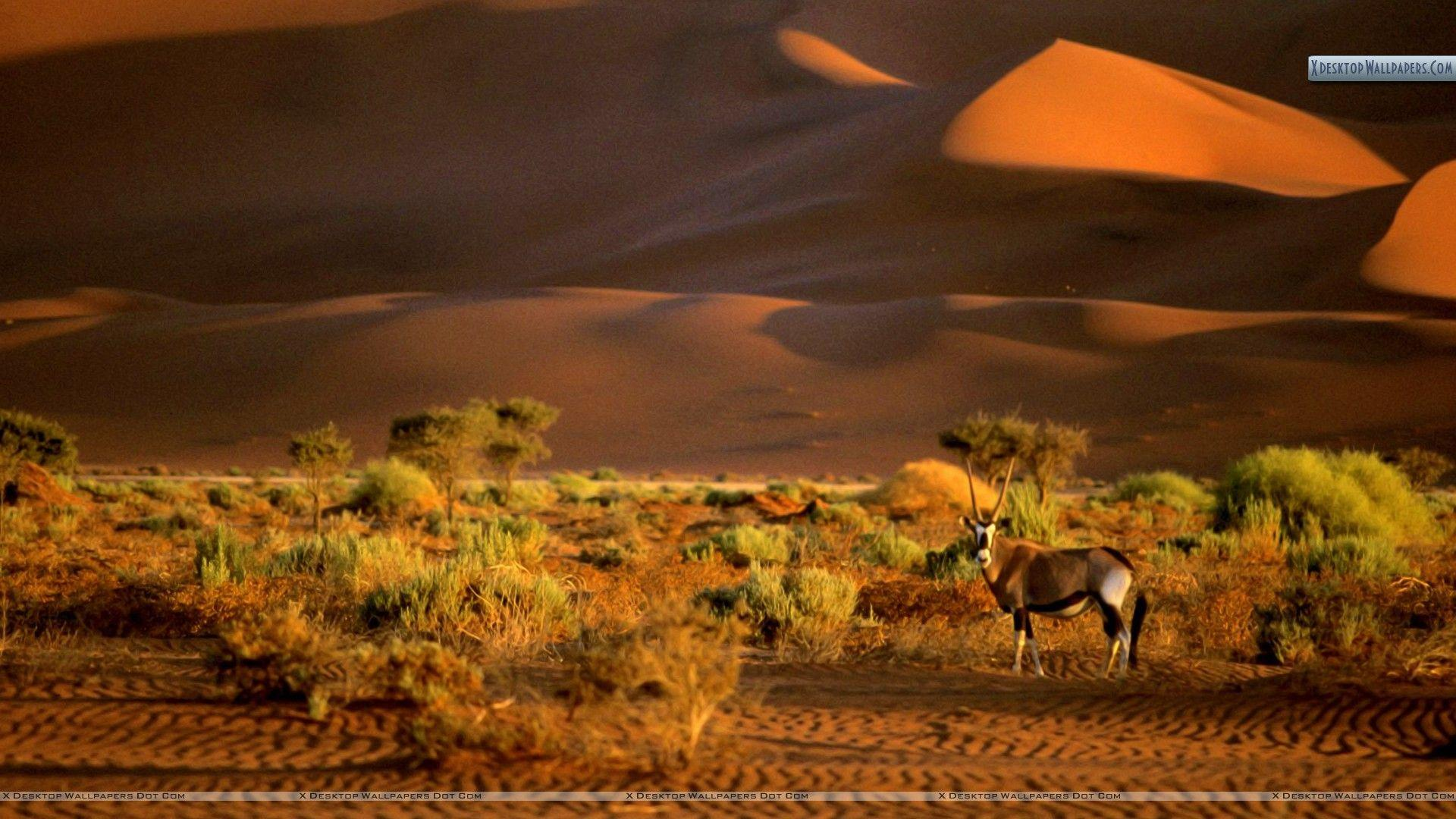 Oryx, Namibia, Africa Wallpaper
