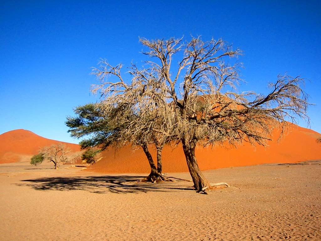 Namibia Wallpapers: Desert, Dunes, Zebra, Etosha National Park ...