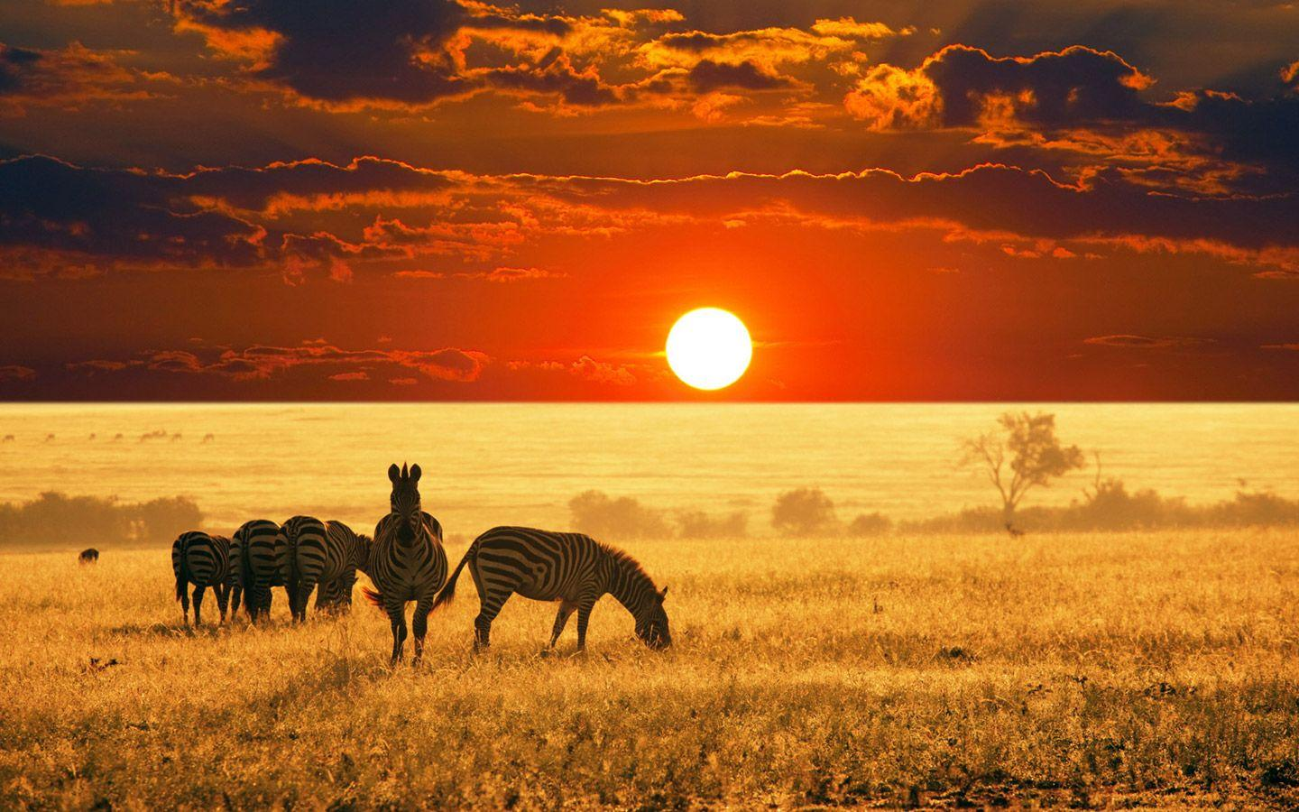 BigOryx: African Wallpapers 7