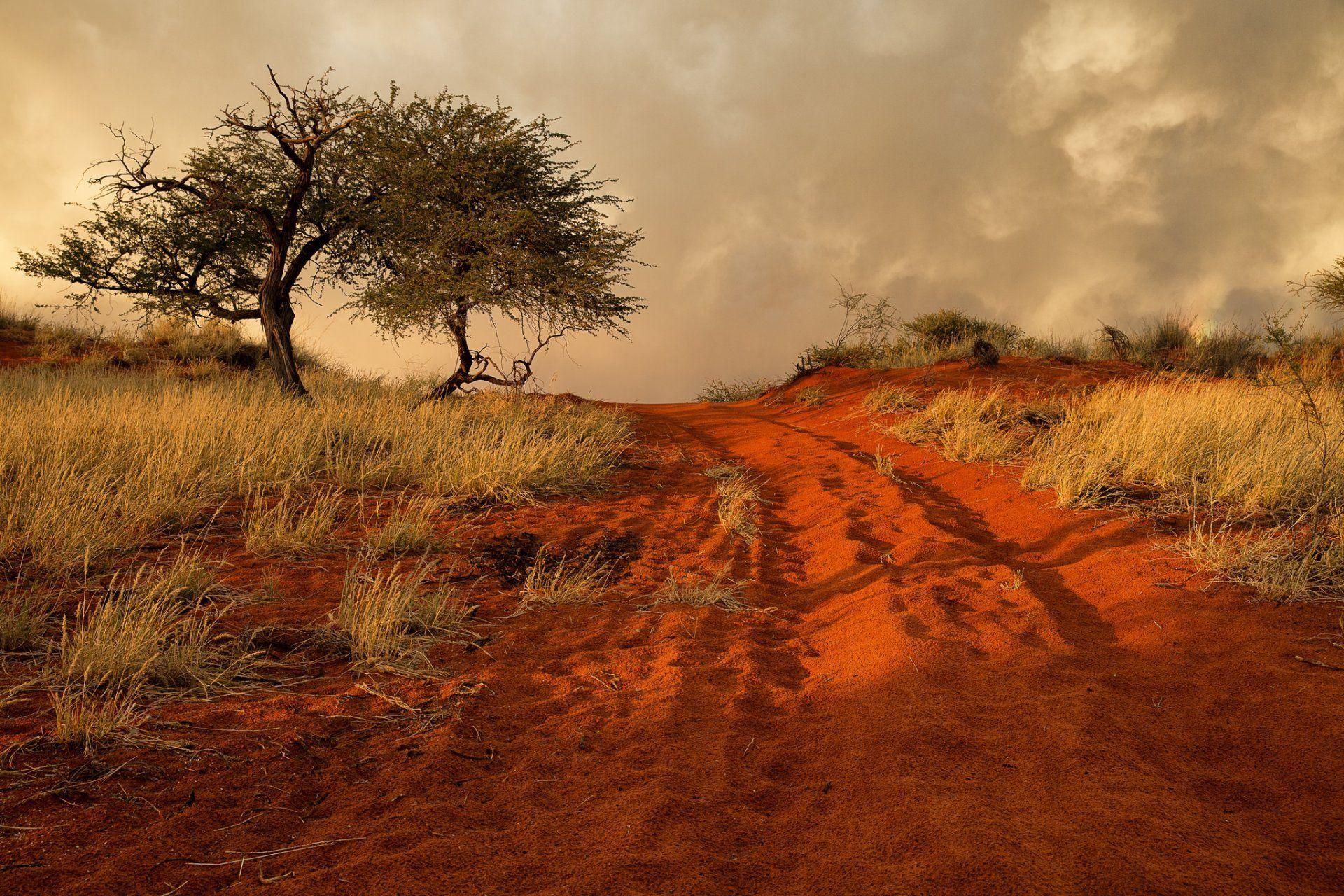 namibia africa hills grass tree sand road HD wallpaper
