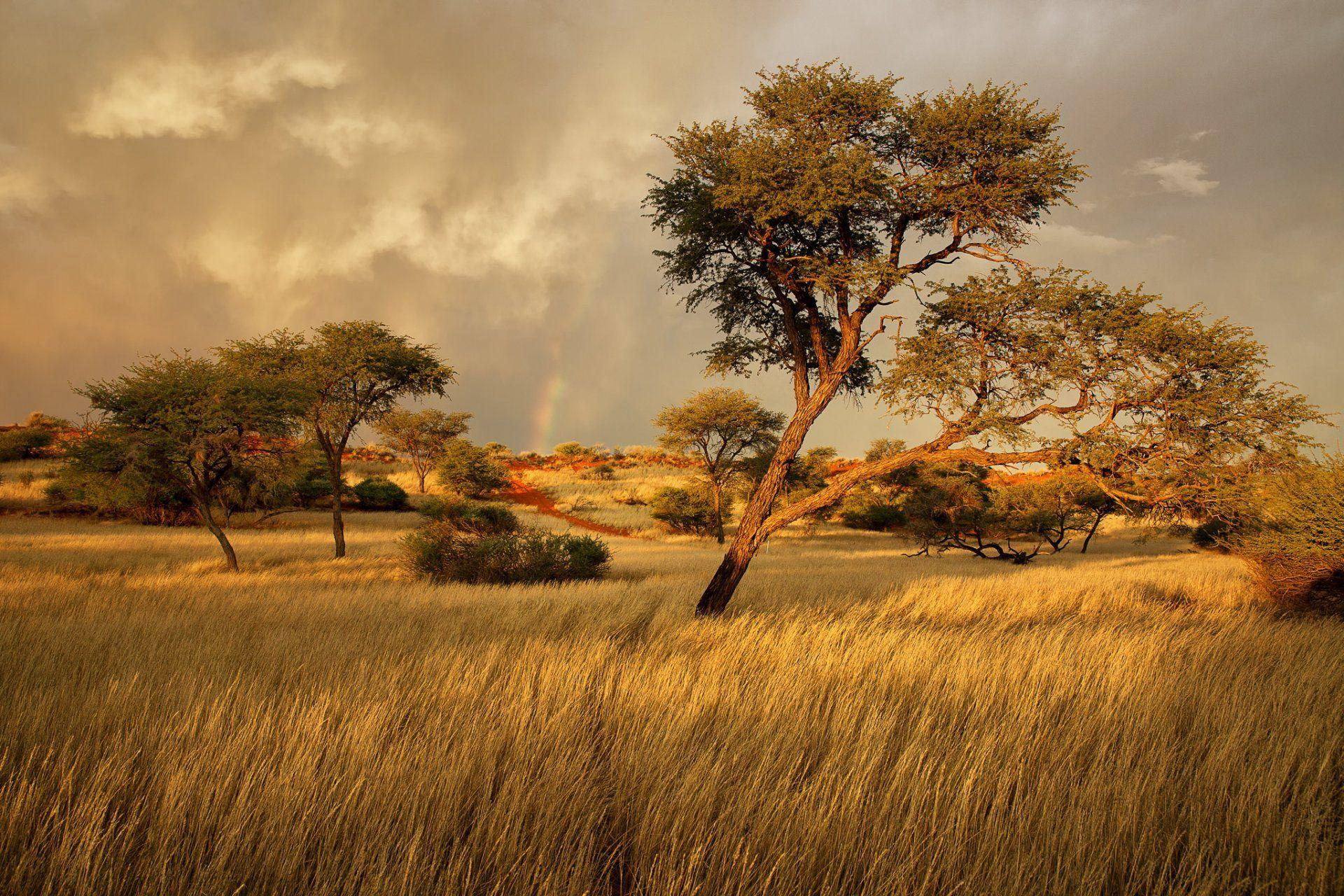 namibia africa savannah grass tree HD wallpaper