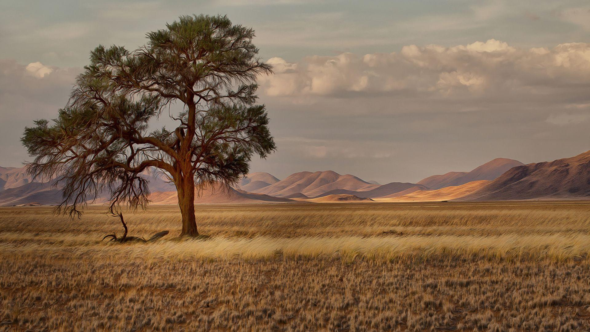 Wallpapers Namibia Nature Meadow Grass Trees 1920x1080