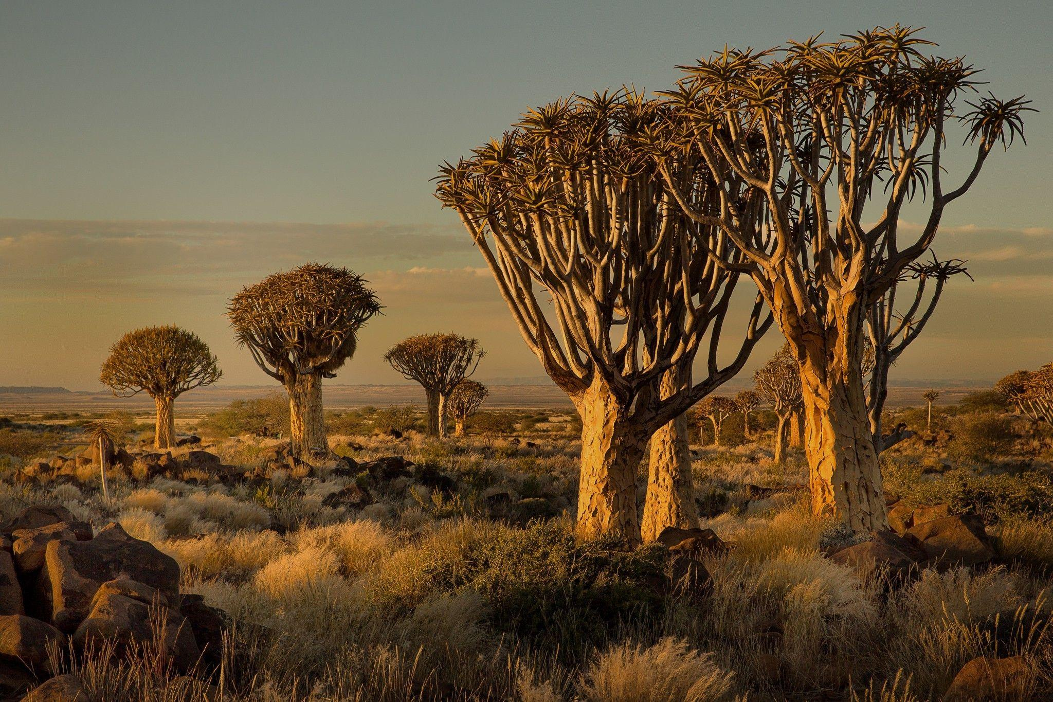Namibia, Africa, Nature, Landscape, Trees, Savannah, Shrubs ...