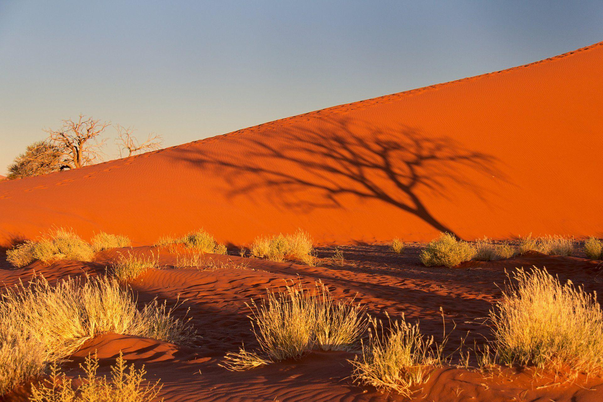 namibia africa namib desert sky sunset shadow tree bush sand dune ...
