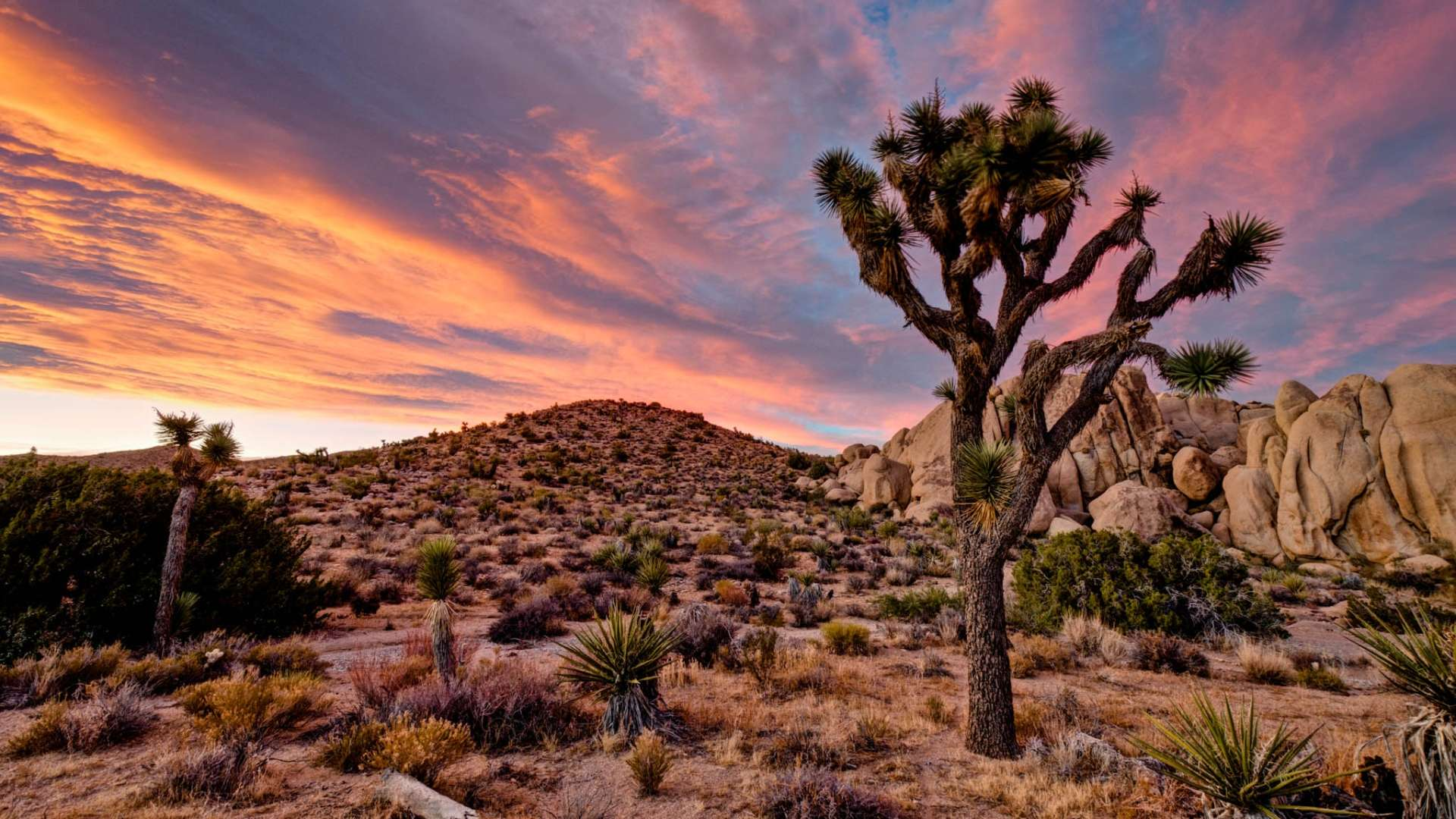 Landscape Wallpapers Hd Joshua Tree National Park In California