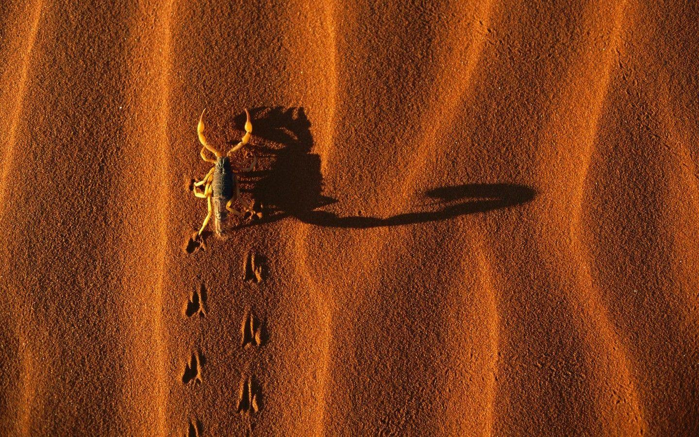 Namibia national park landscapes scorpions shadows wallpaper ...