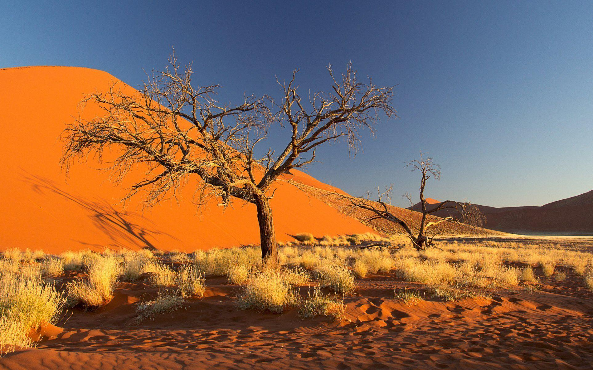 namibia africa namib desert sky dune sand tree bush HD wallpaper