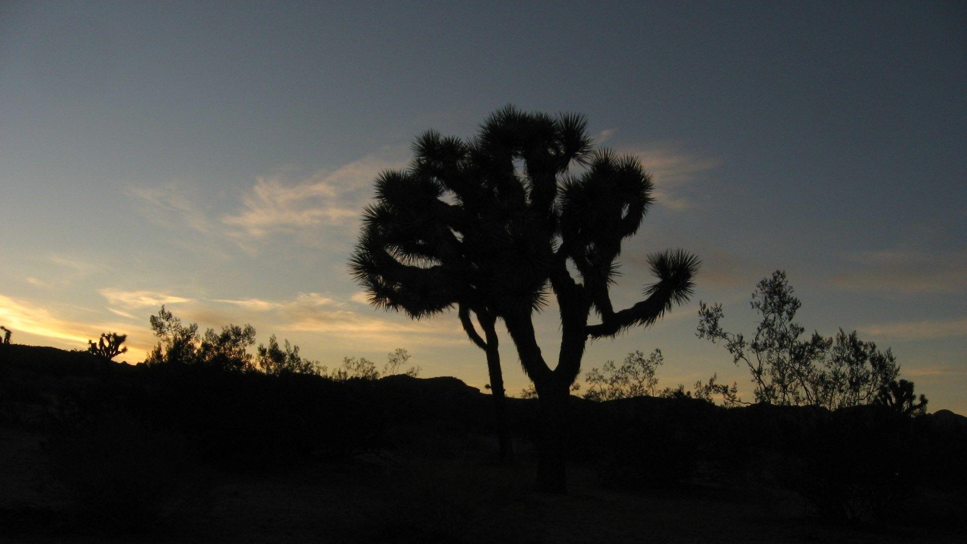 joshua tree national park wallpapers 1080p high quality, 1920x1080
