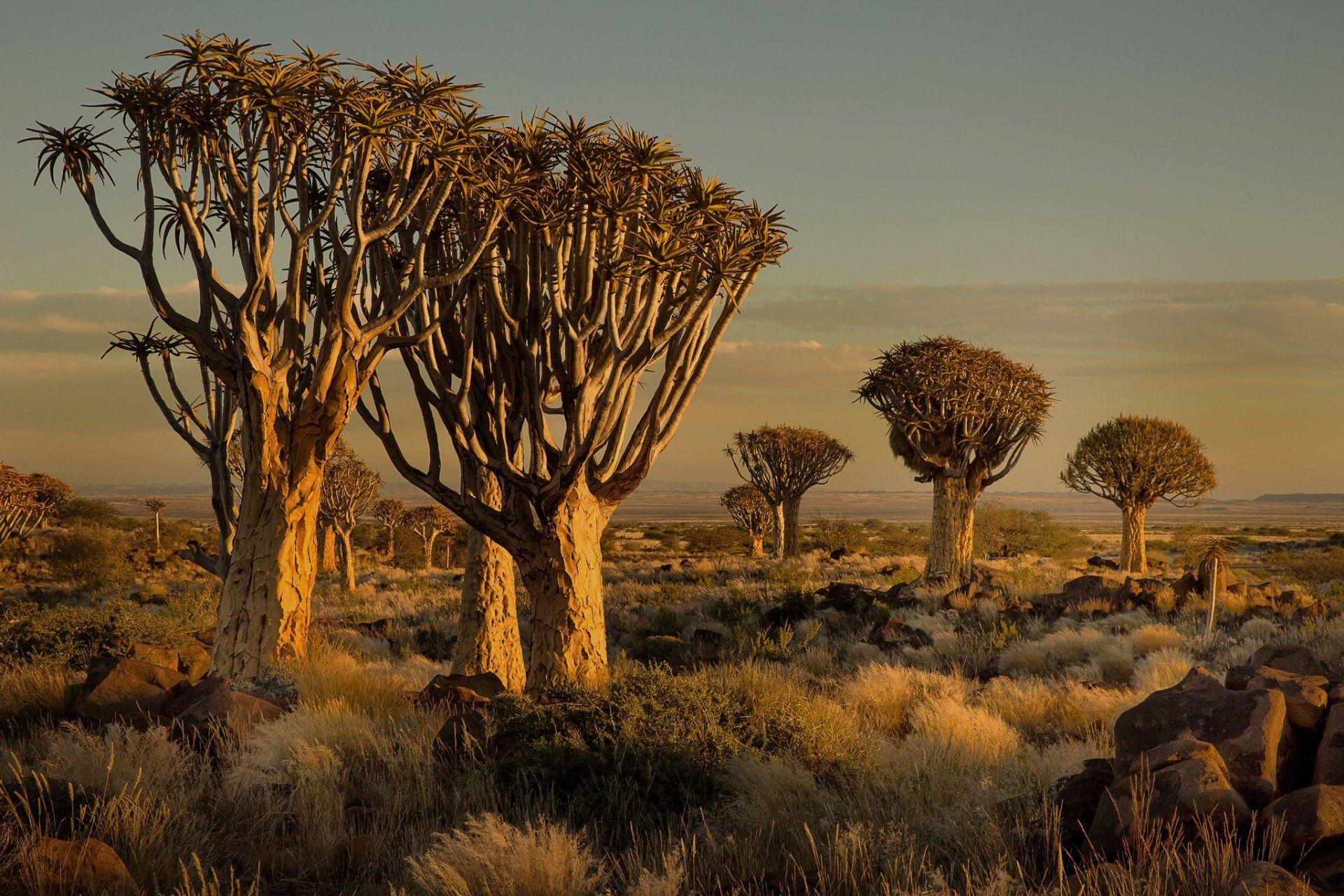 namibia africa sunset tree stones grass HD wallpaper