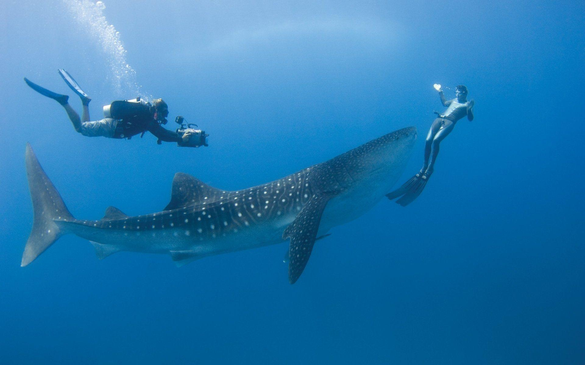 16 Whale Shark HD Wallpapers | Backgrounds - Wallpaper Abyss