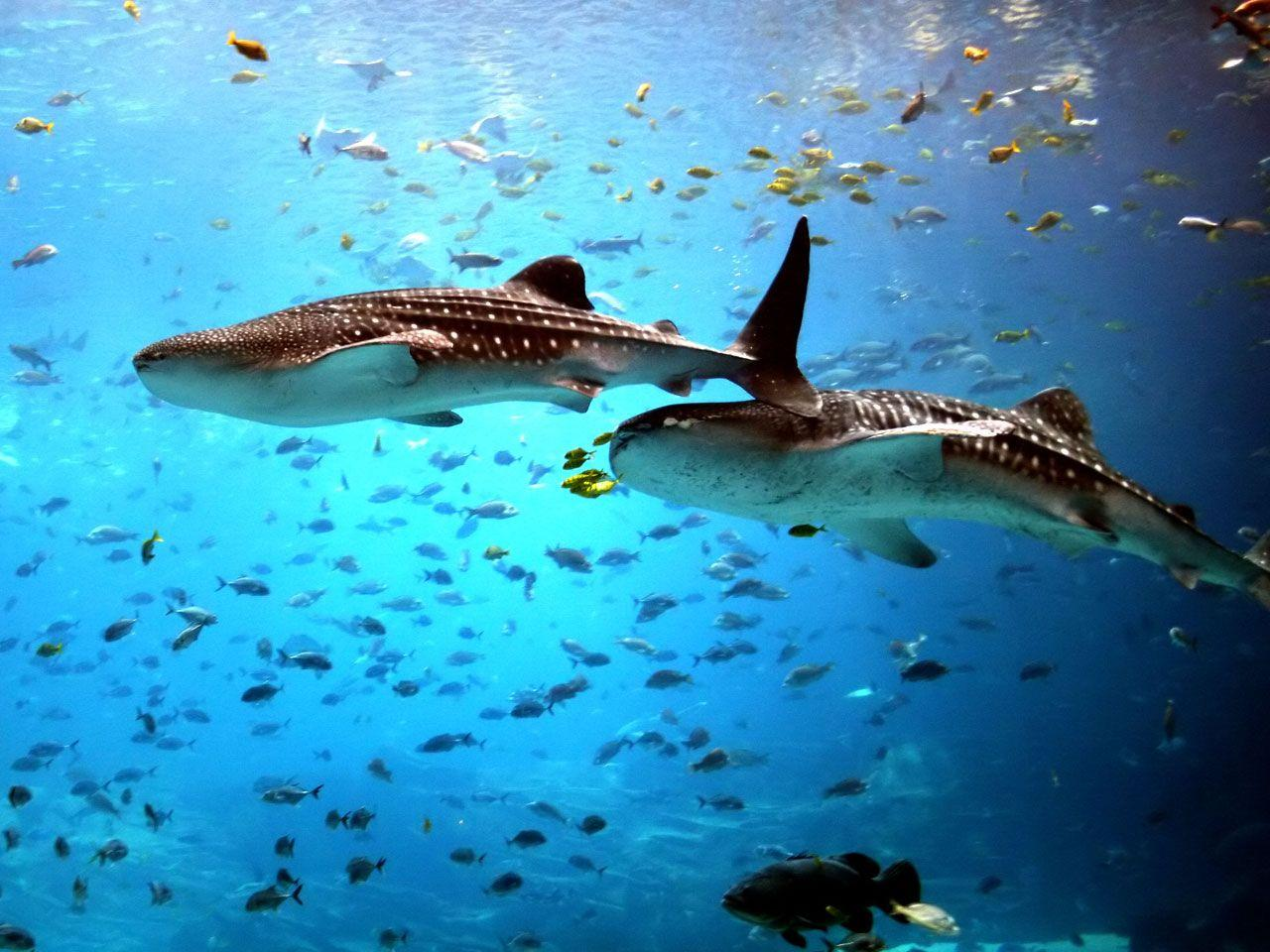 Sea Creatures Wallpaper 1920×1200 Sea Animals Pictures Wallpapers ...