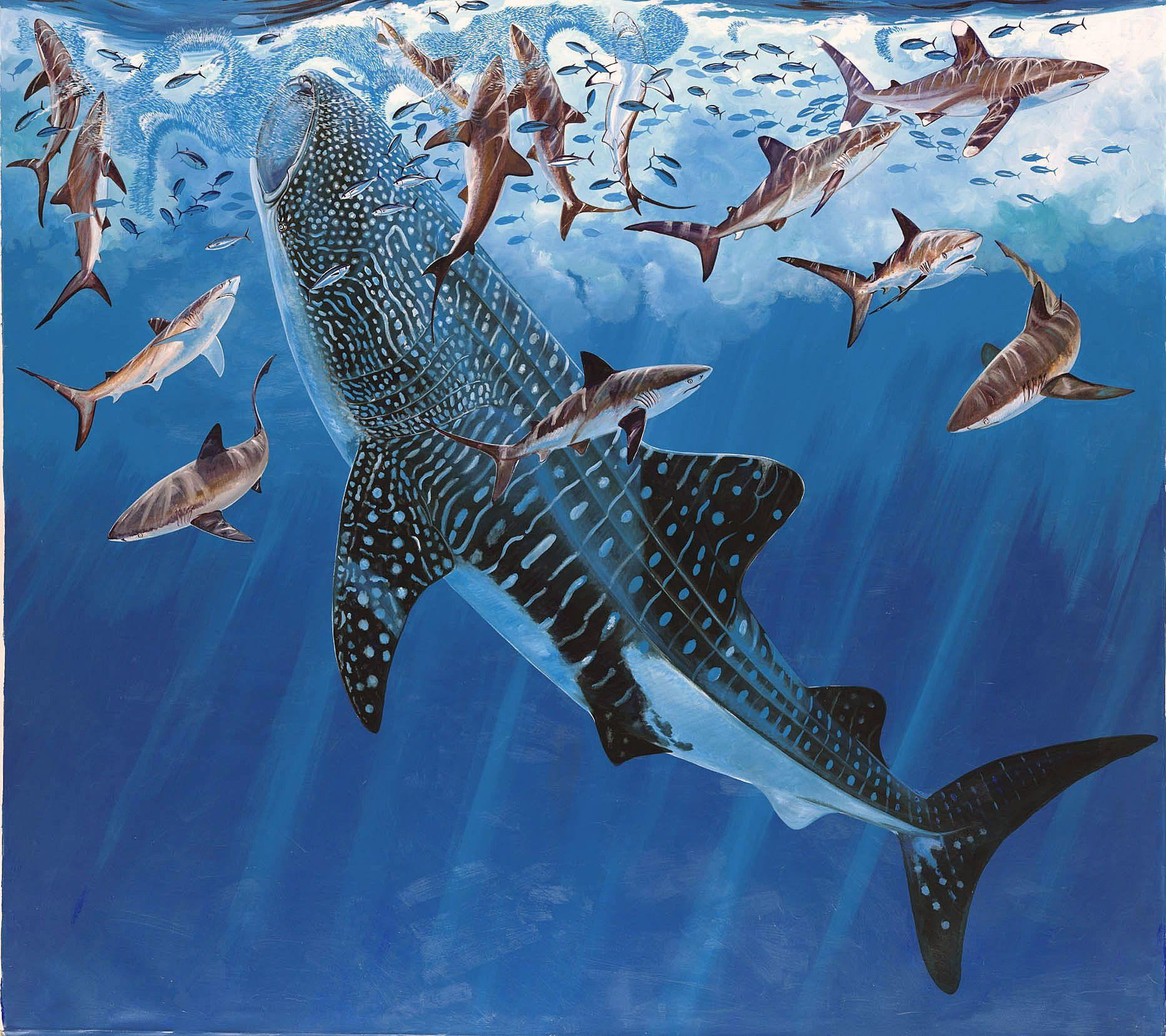 Whale Shark Painting - wallpaper.
