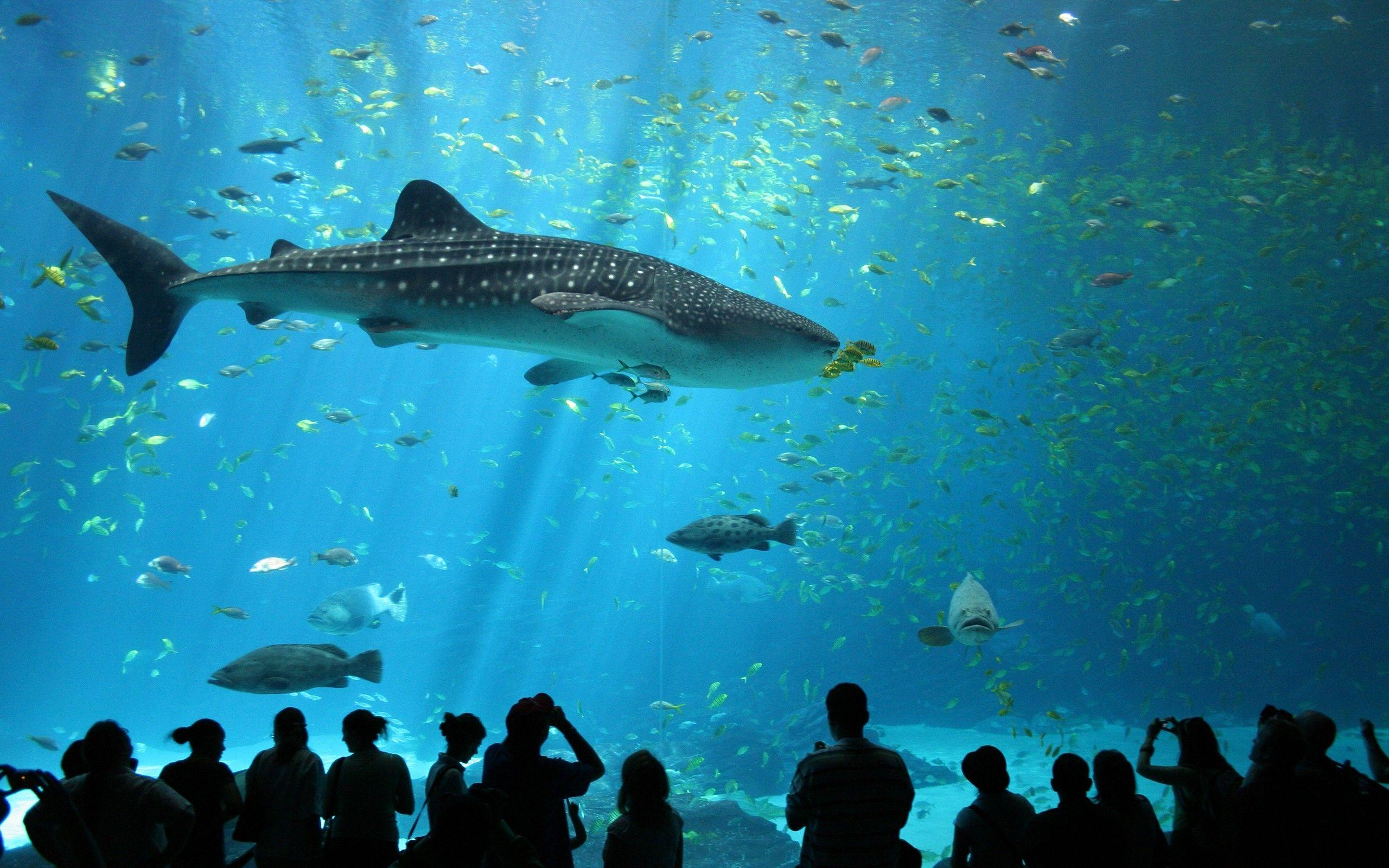animals, Wildlife, Nature, Sea, Fish, Whale Shark, Shark, Aquarium ...