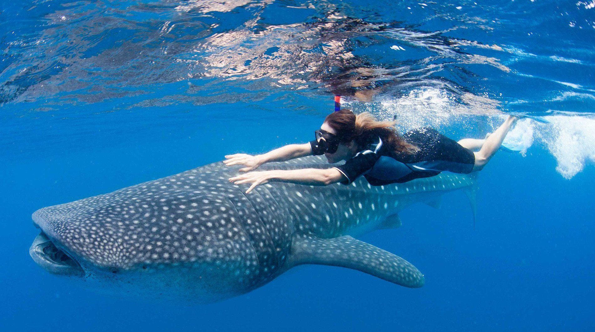 Whale shark underwater ocean sea wallpaper | 1900x1060 | 418119 ...