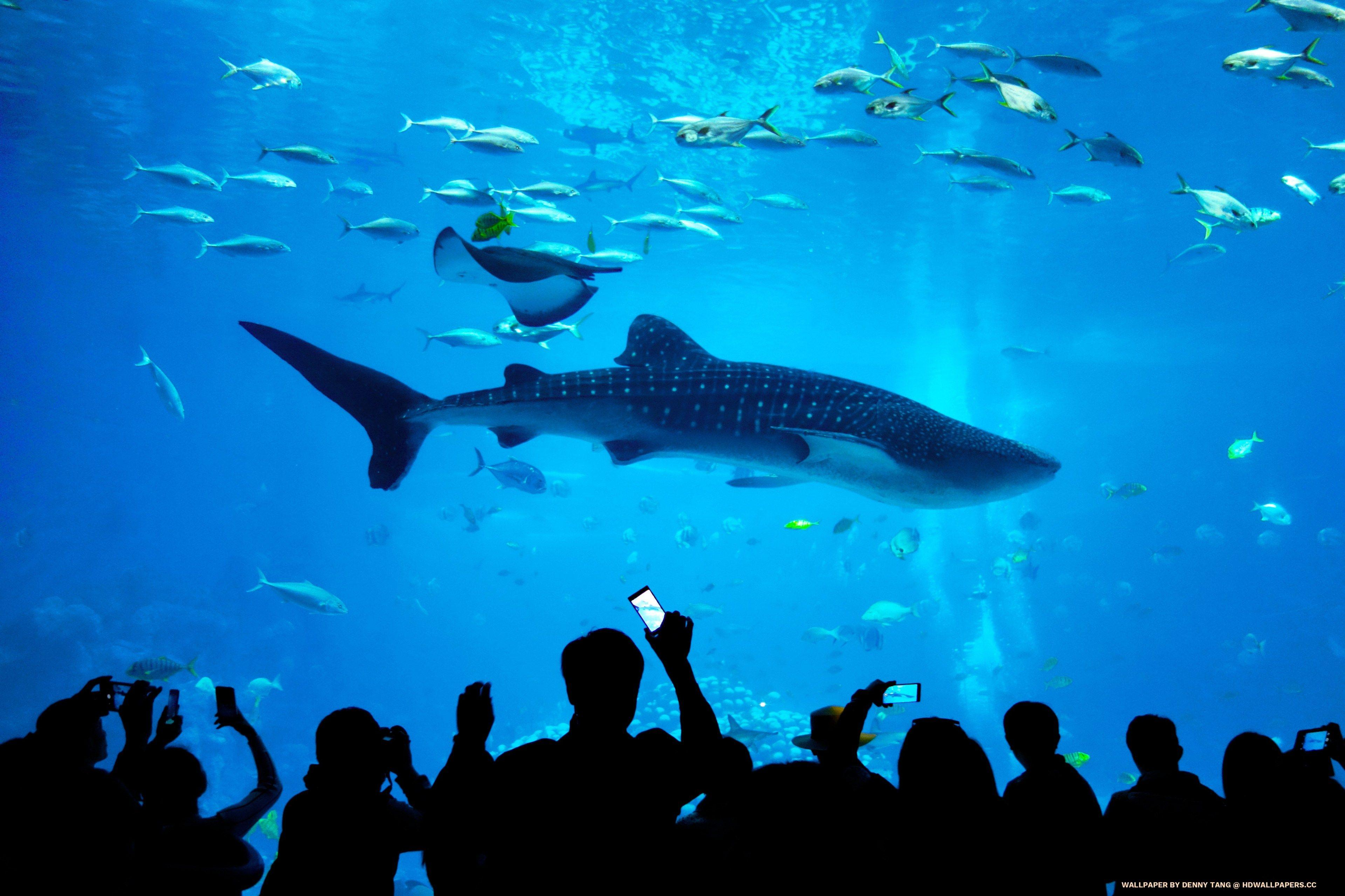Whale Shark Aquarium - HD Wallpapers
