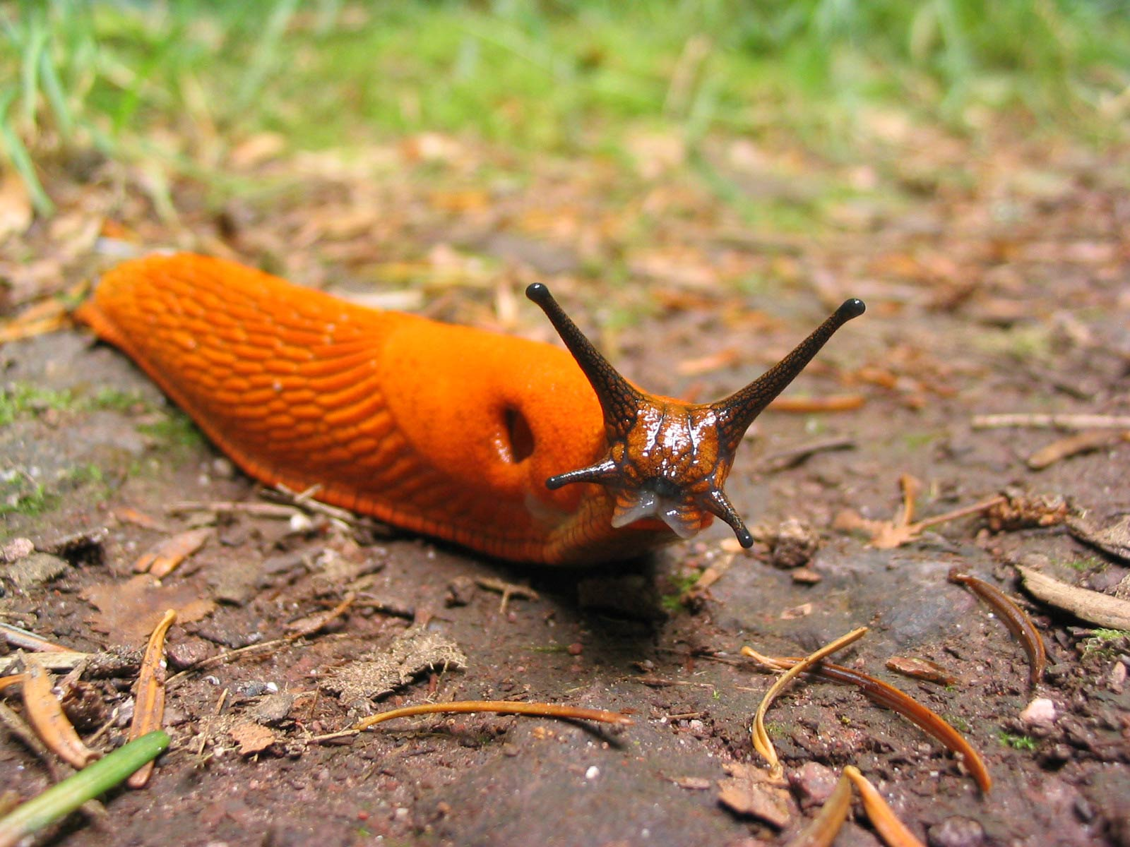 Free Slug Wallpaper download - Animals Town