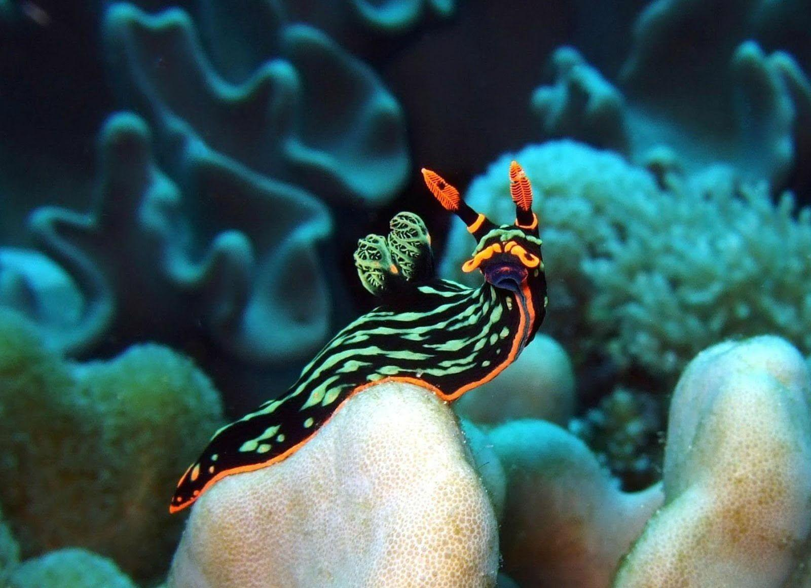 31 Sea Slug HD Wallpapers | Backgrounds - Wallpaper Abyss