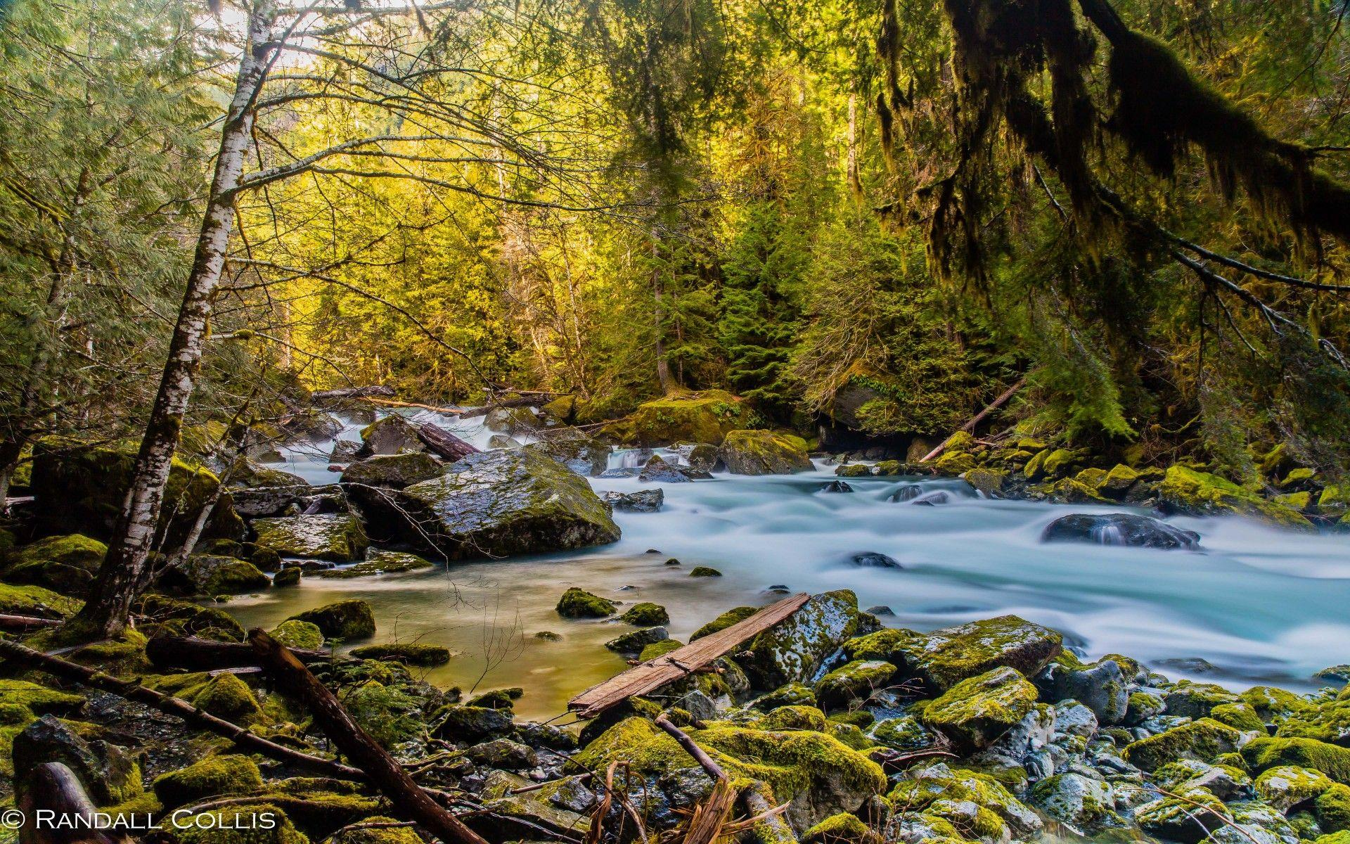 Mountain River North Fork Skokomish River Olympic National Park