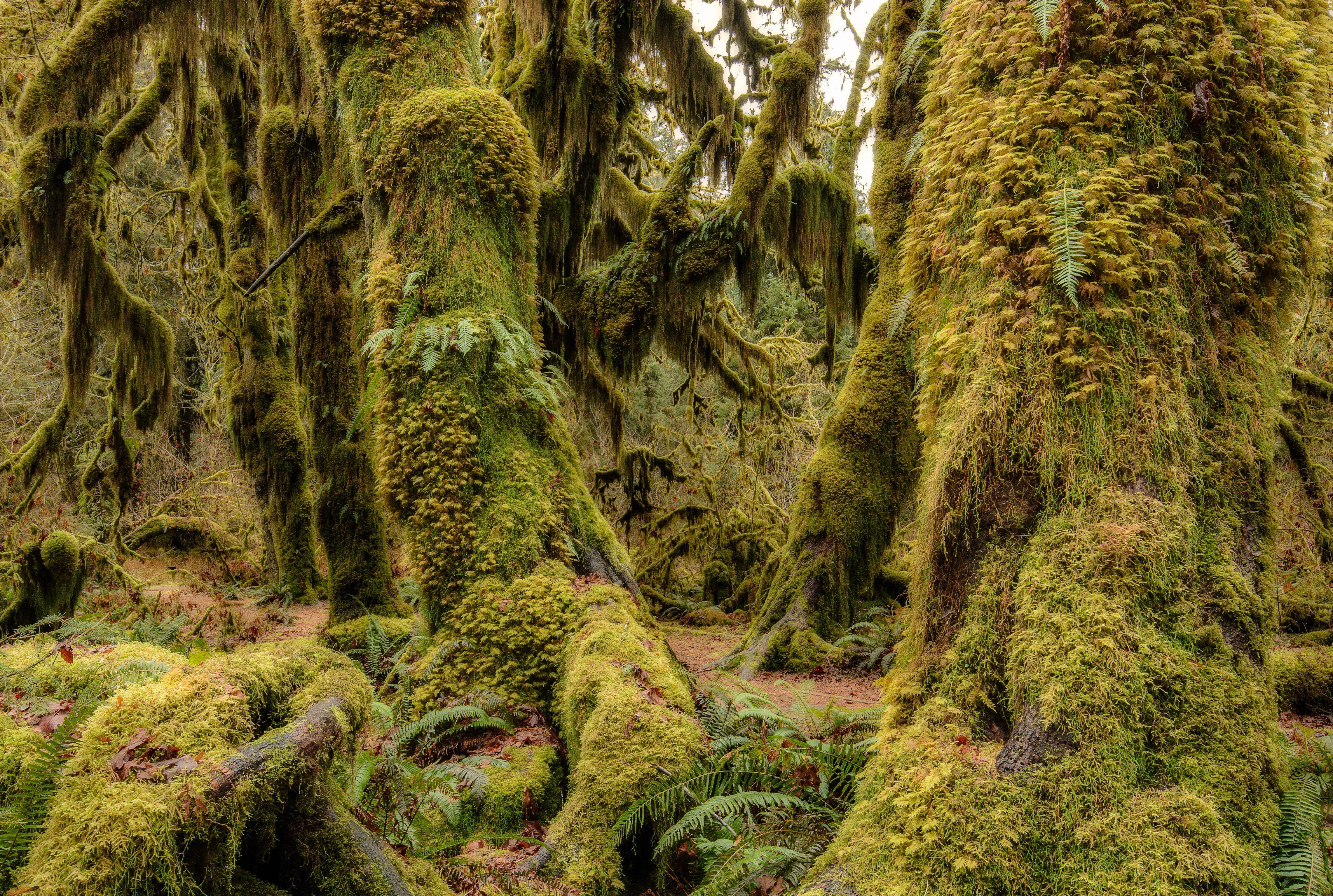 Olympic National Park Washington USA wood moss flora Olympic