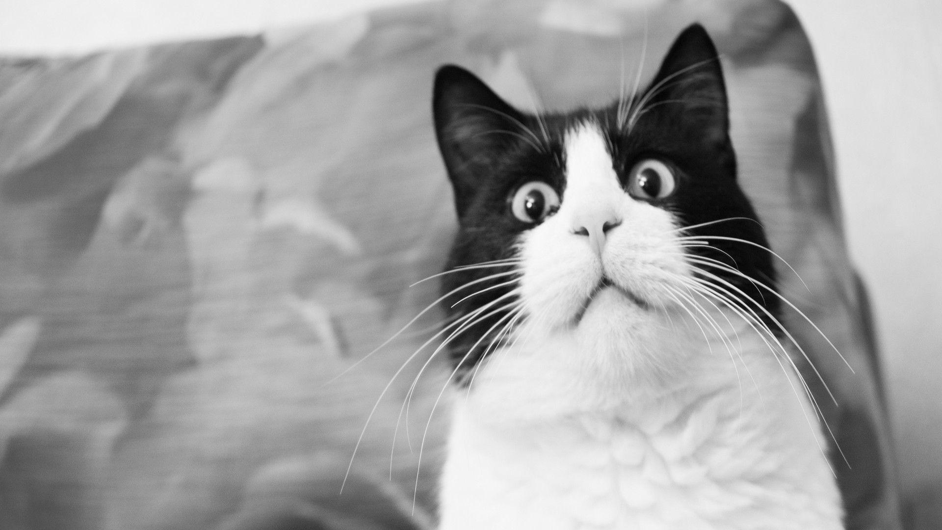 Черные картинки с белыми смешные, картинки смешные