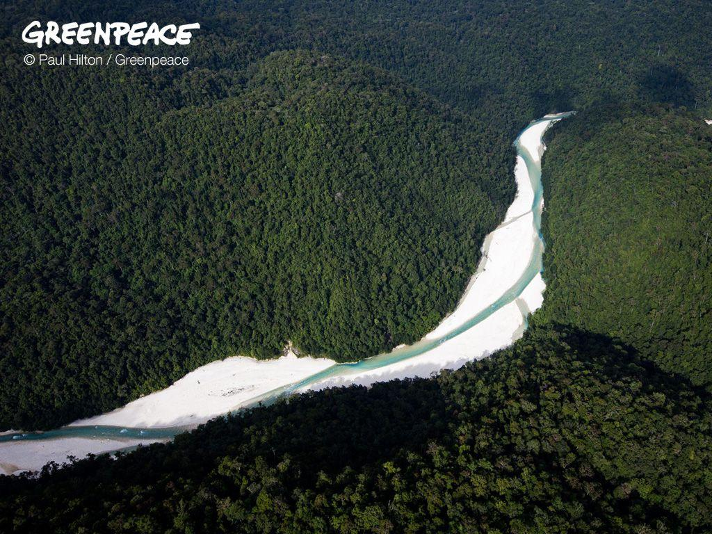 Wallpapers | Greenpeace Australia Pacific