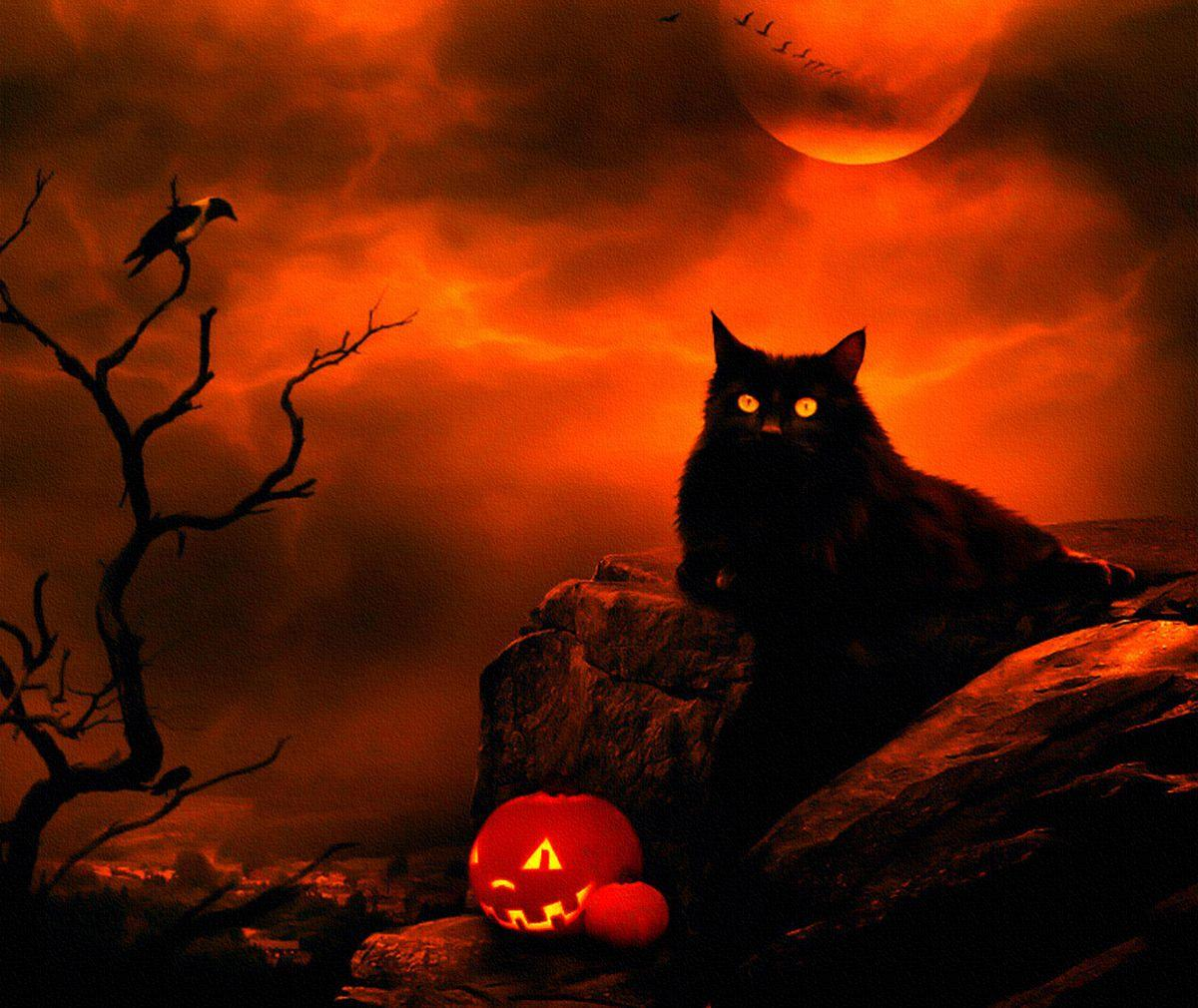 Halloween Cat | Halloween cat moon night clouds crow black HD ...