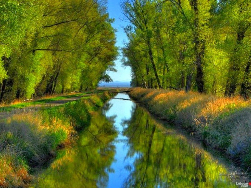 4488BB Color wallpapers: Little Stream Cool Trees Said Images ...
