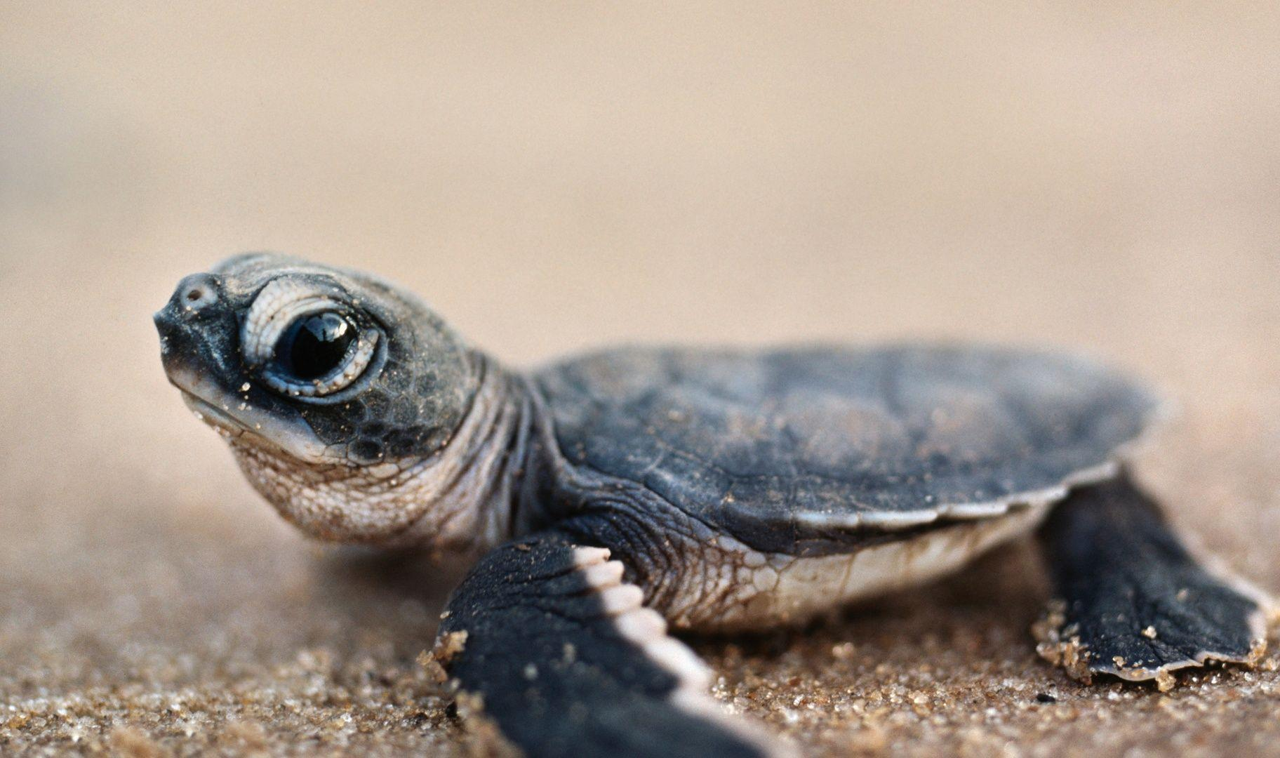 Sunshine Palate: The Baby Sea Turtles are Hatching  |Baby Sea Turtles