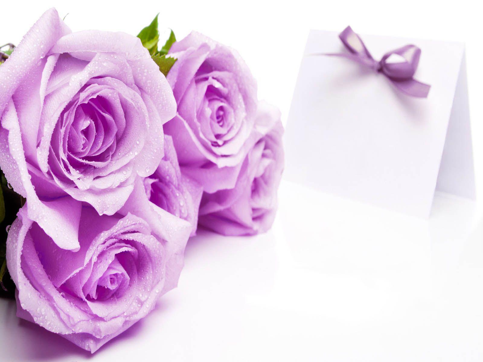 Rose Flowers Hd Wallpapers Wallpaper Cave