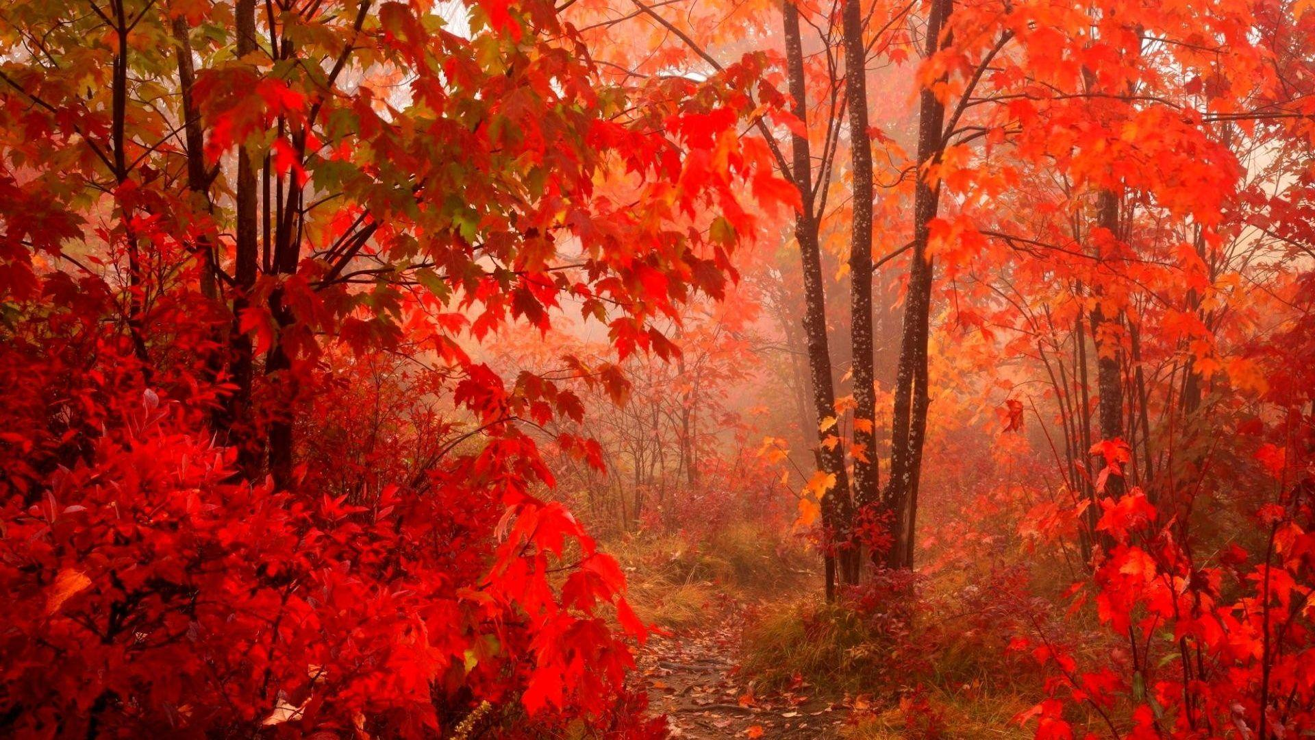 Autumn Leaves 2017 Wallpapers - Wallpaper Cave