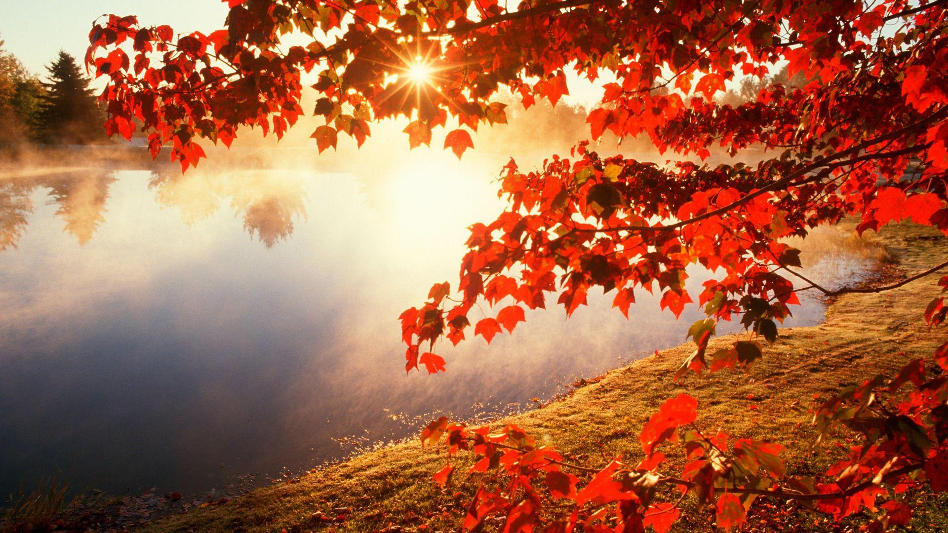 Autumn Leaves Wallpapers | HD Wallpapers Pulse