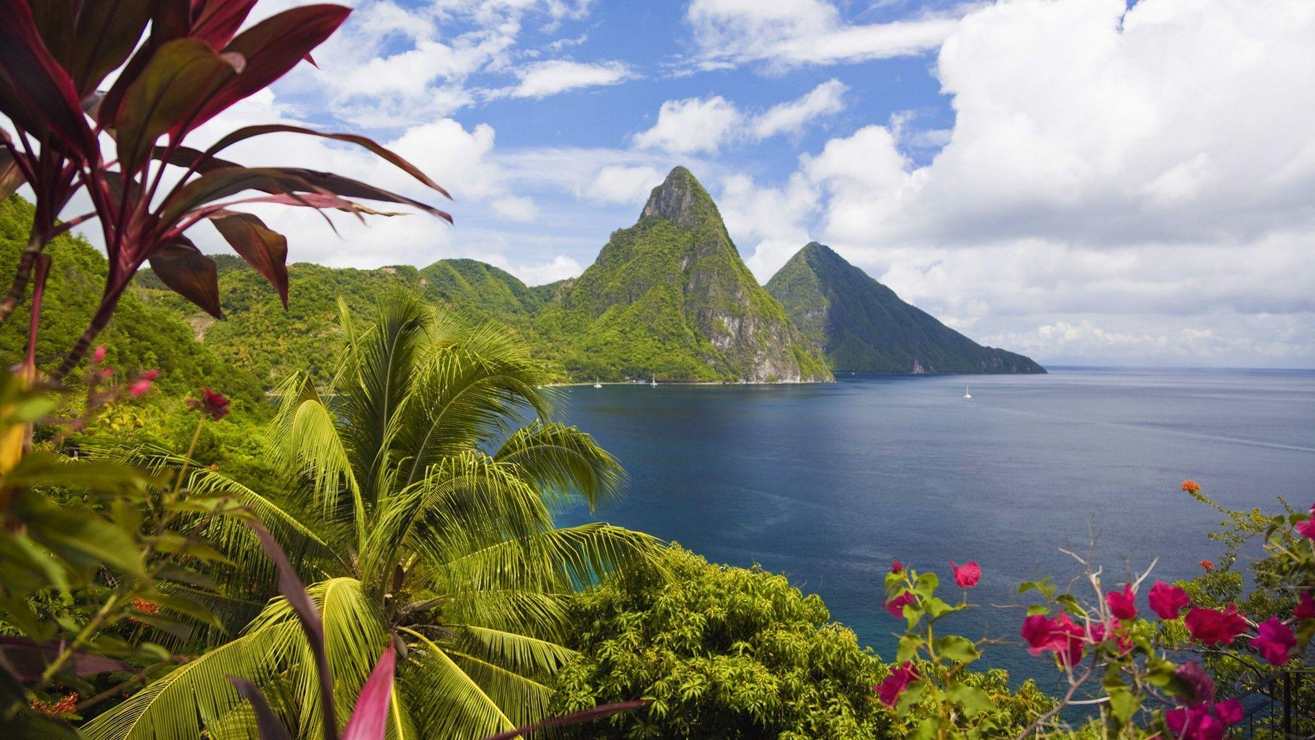 Palm trees bay sea saint lucia wallpapers