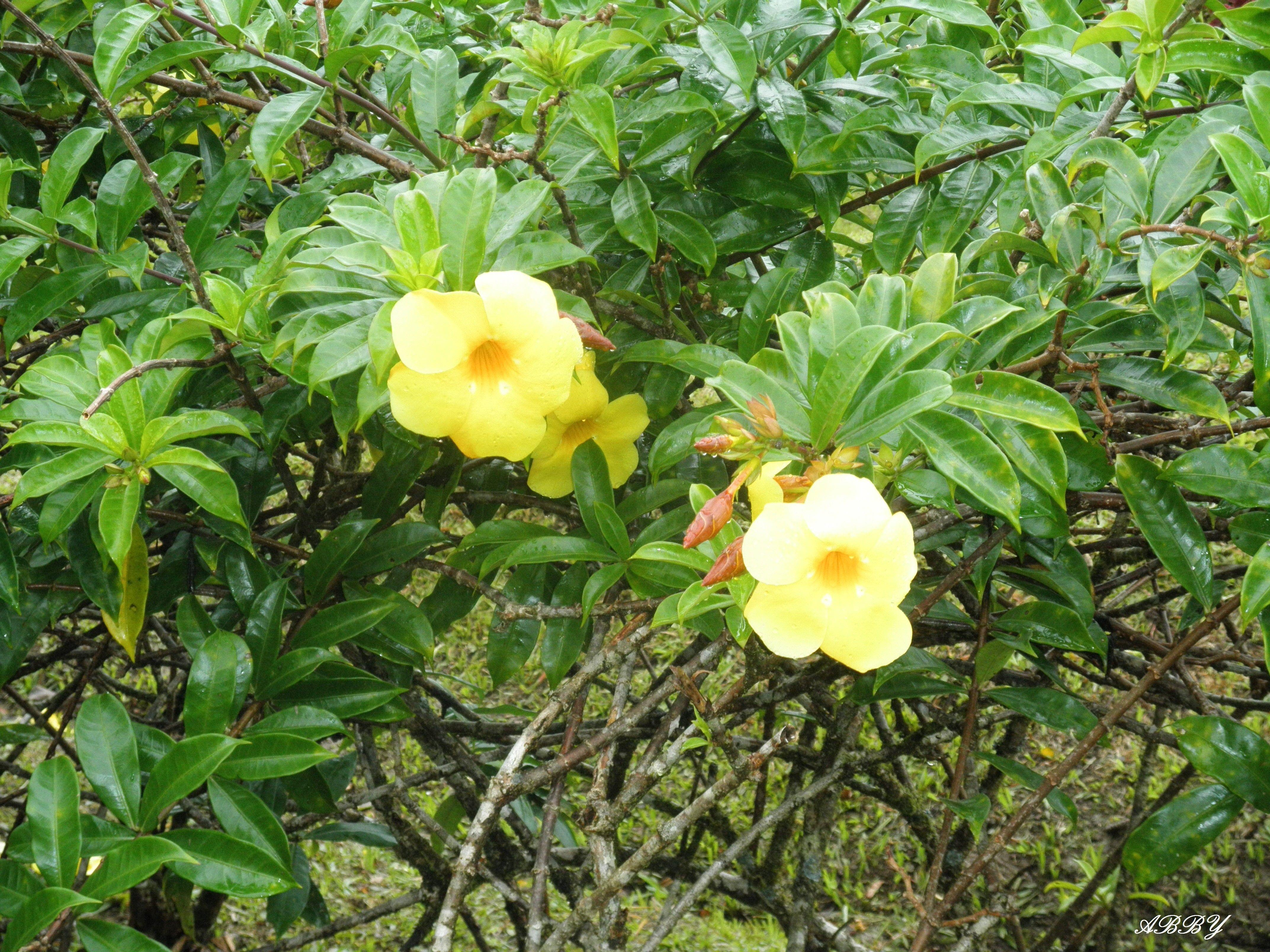 Flower: Flowers St Lucia Islands Photography Green Yellow Leaves ...