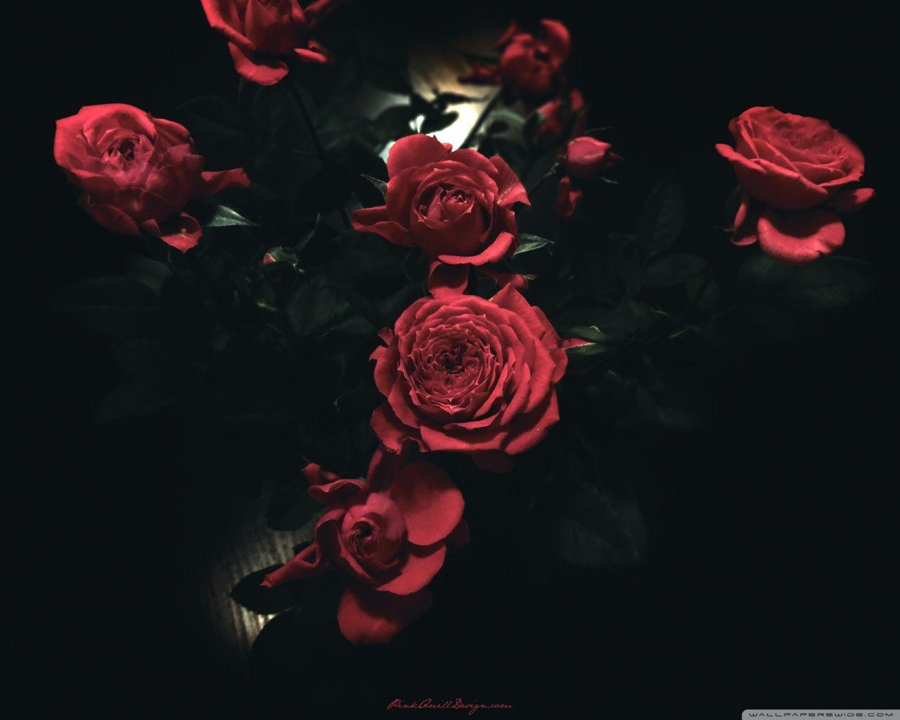 Dark Rose Wallpapers Wallpaper Cave