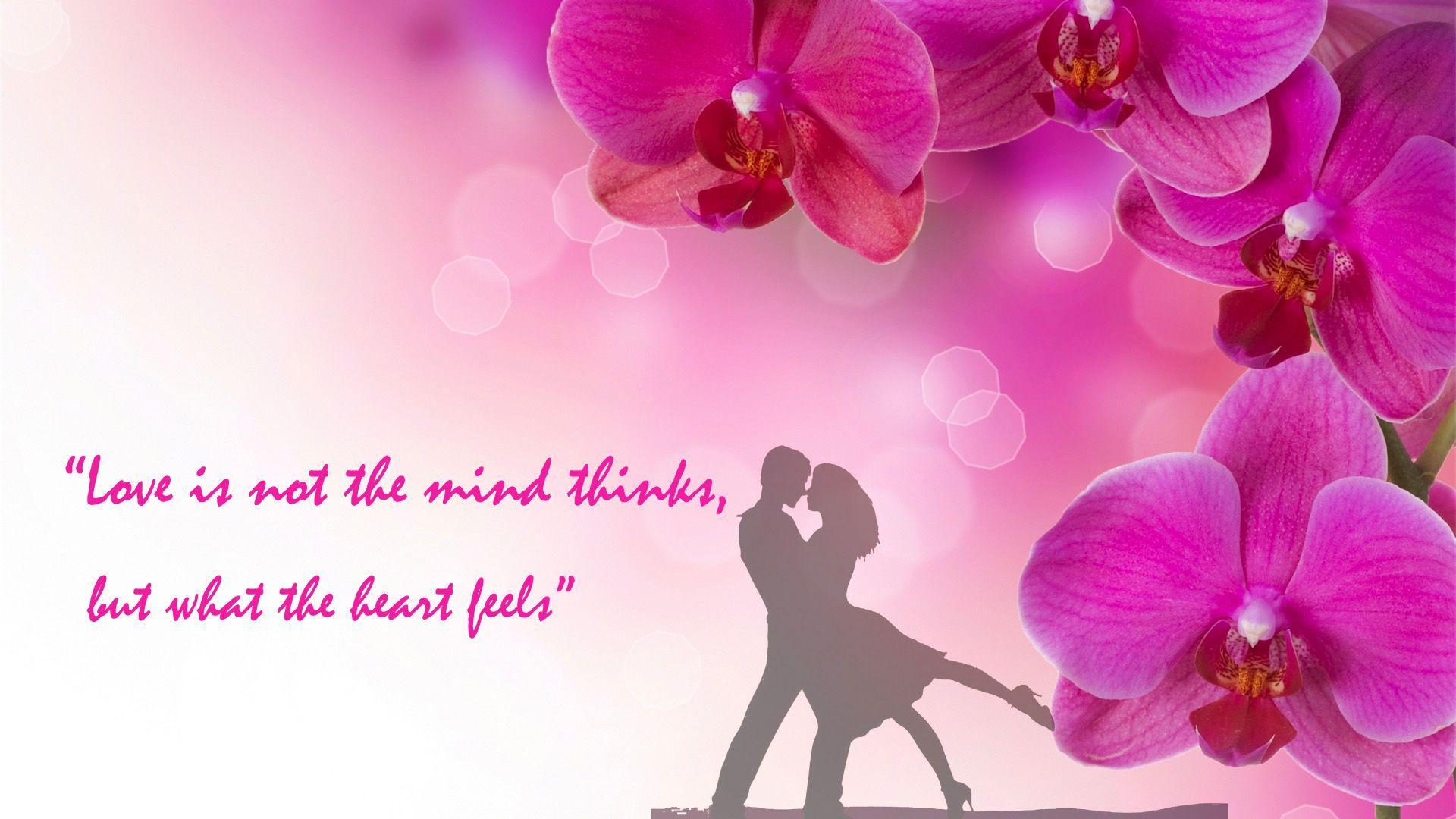 Love Pink Orchid Flower Romantic Wallpaper 24 3687 Hd