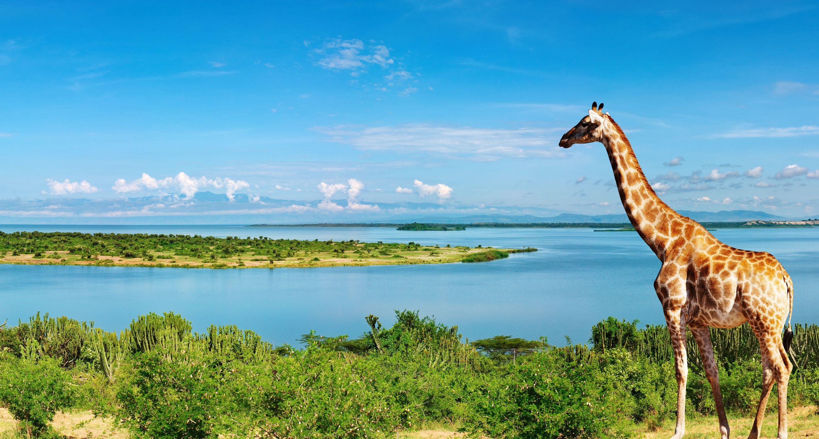 uganda - Afrikas Största Länder