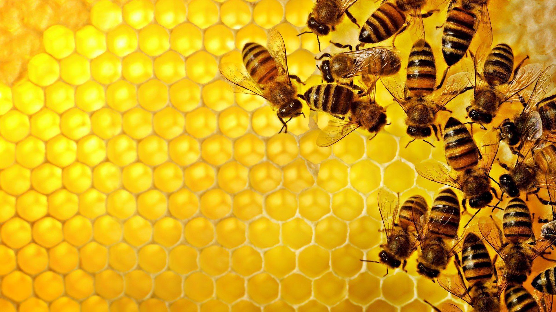 Honey Bee Wallpapers Wallpaper Cave