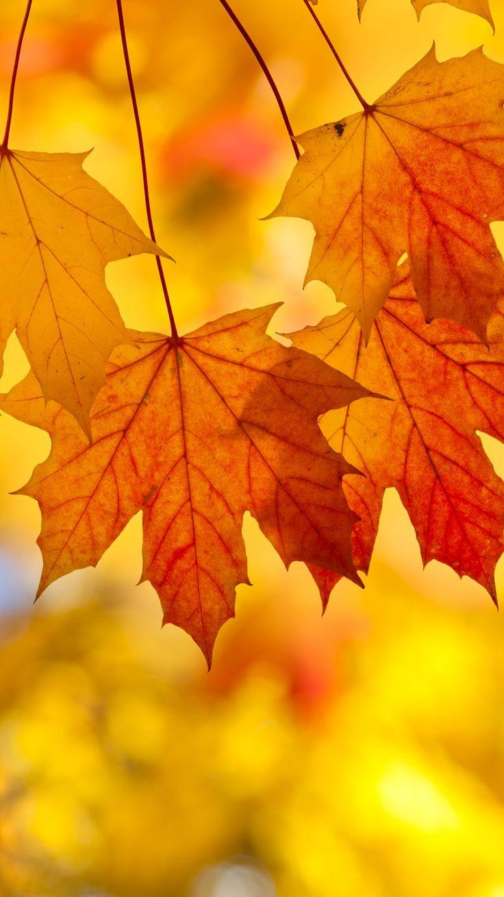 Thanksgiving Autumn Leaves Wallpapers - Wallpaper Cave
