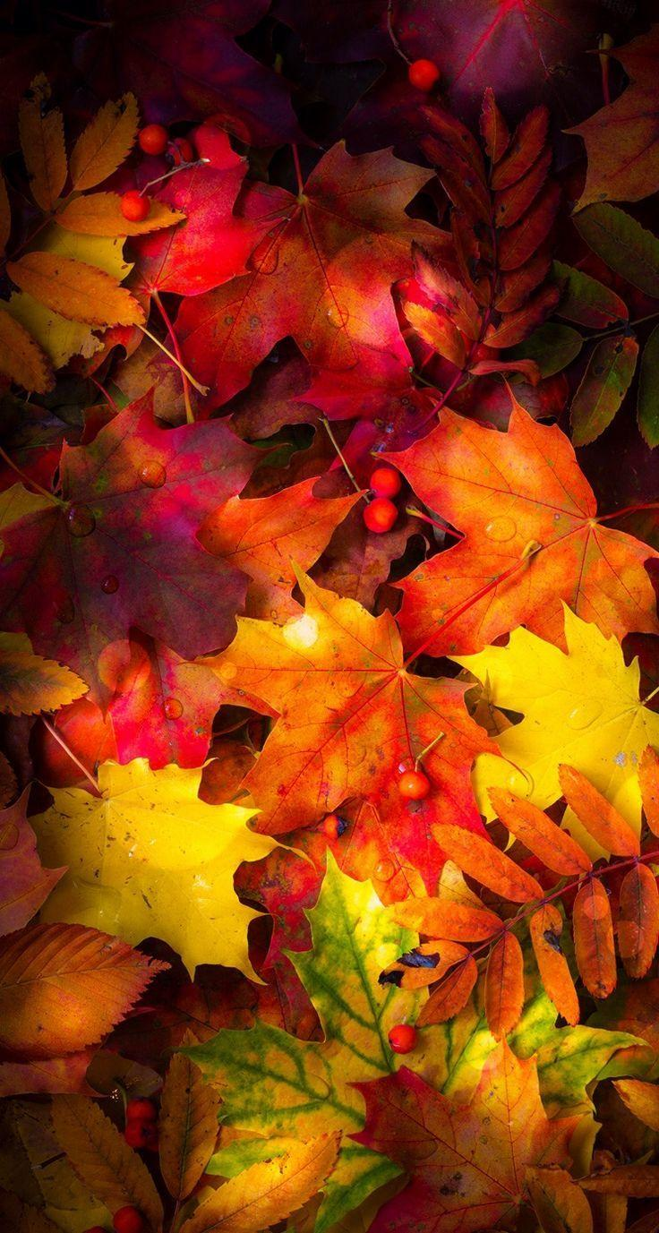 It's just a picture of Persnickety Fall Leaf Background