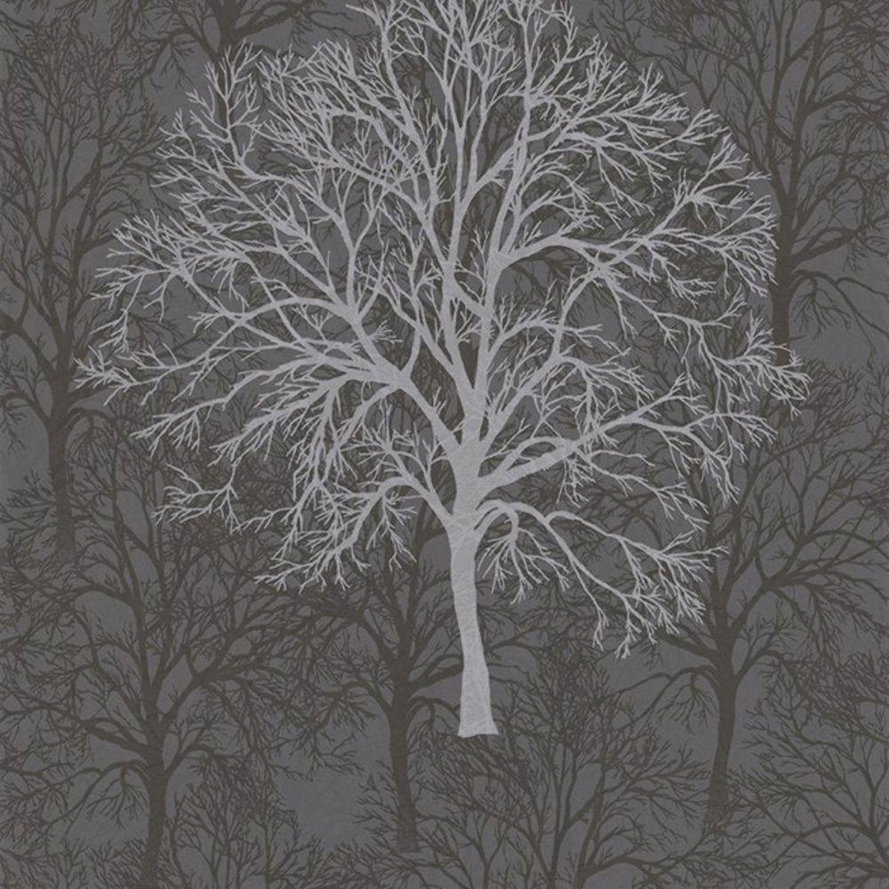 Silver Tree Wallpaper, Images, Wallpapers of Silver Tree in 100 ...