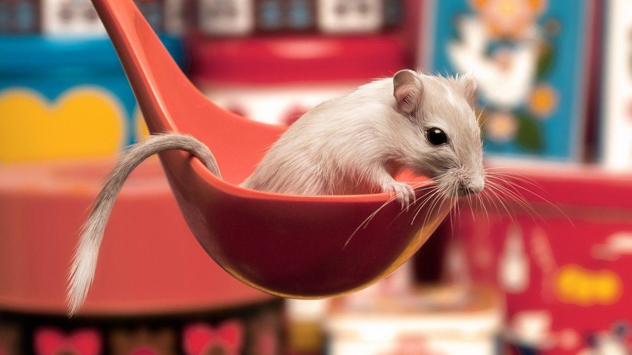 Wallpaper gerbil, spoon, cute animals, funny, Animals #4781