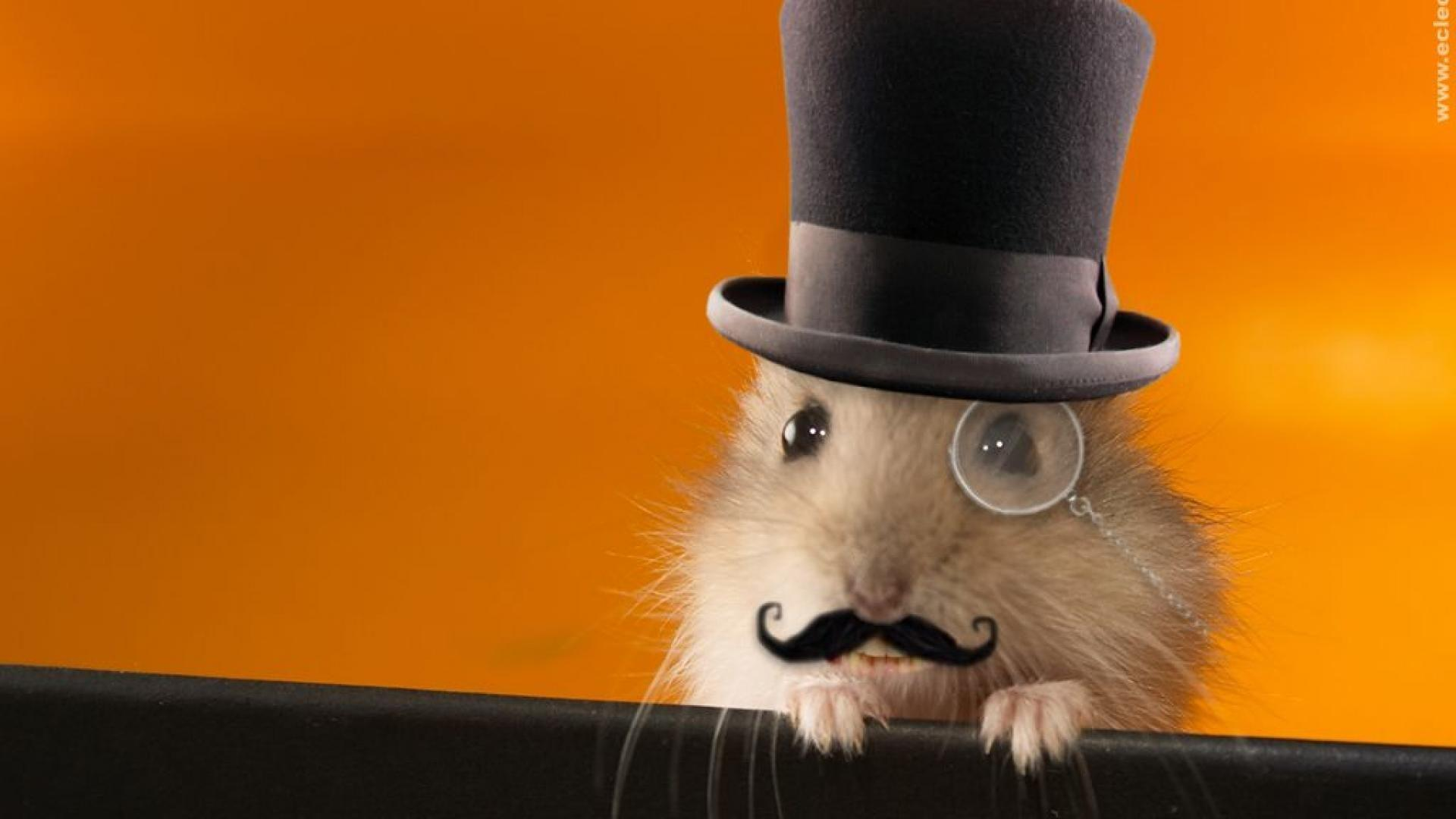 ScreenHeaven: Anonymous funny gerbils mustache desktop and mobile ...