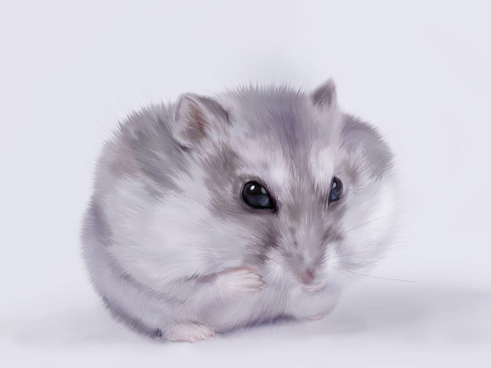 Cute hamster wallpaper Animal wallpapers | Hamster Care Guide Tips ...