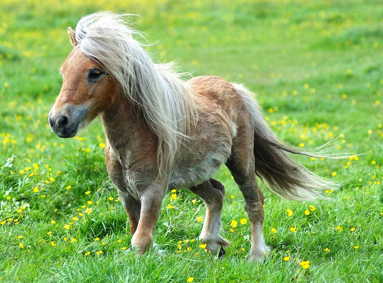 Baby Horses Wallpapers