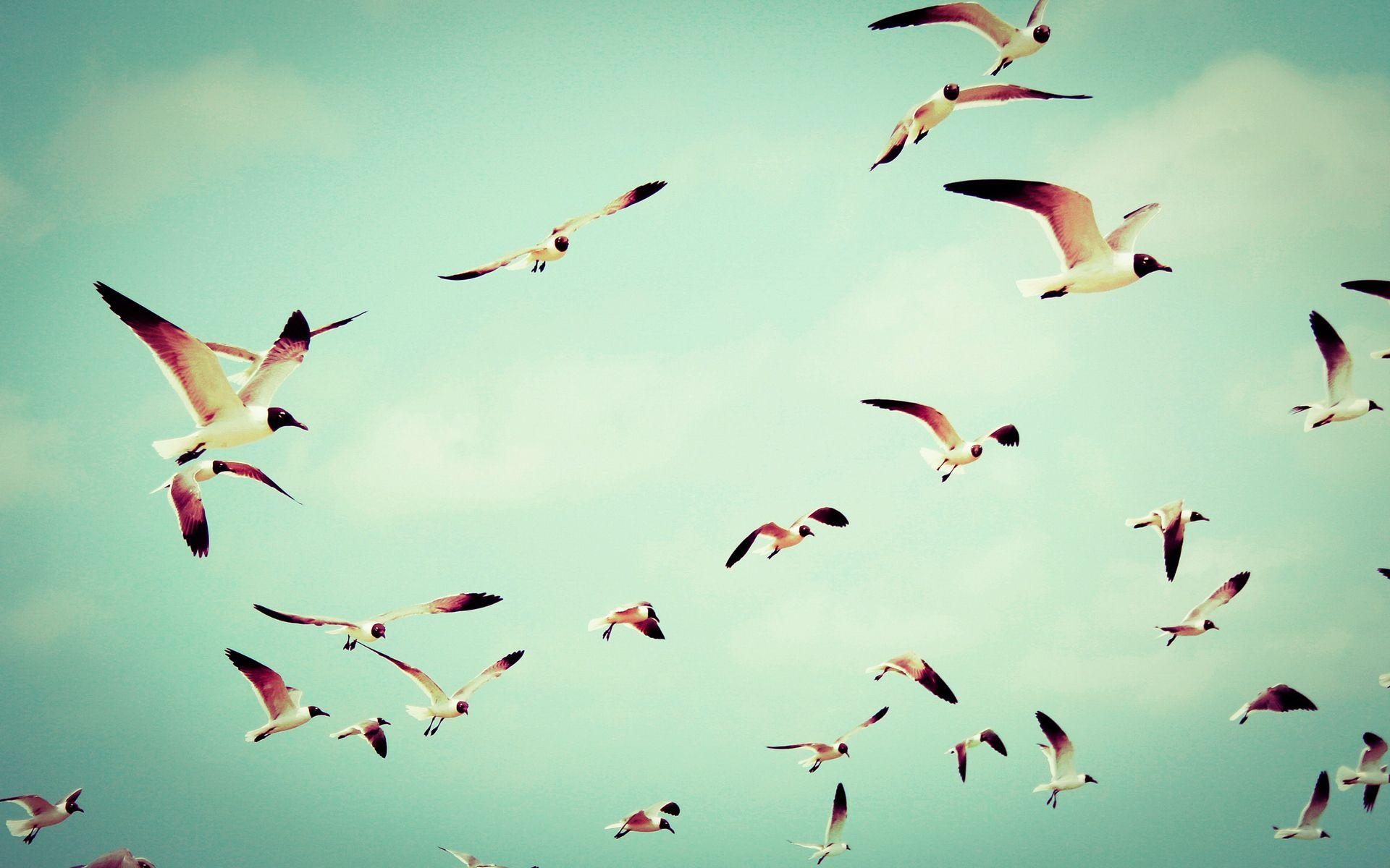 Flying Birds Wallpapers - Wallpaper Cave