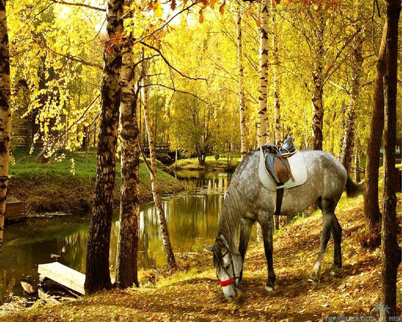 Fall Wallpaper With Horse
